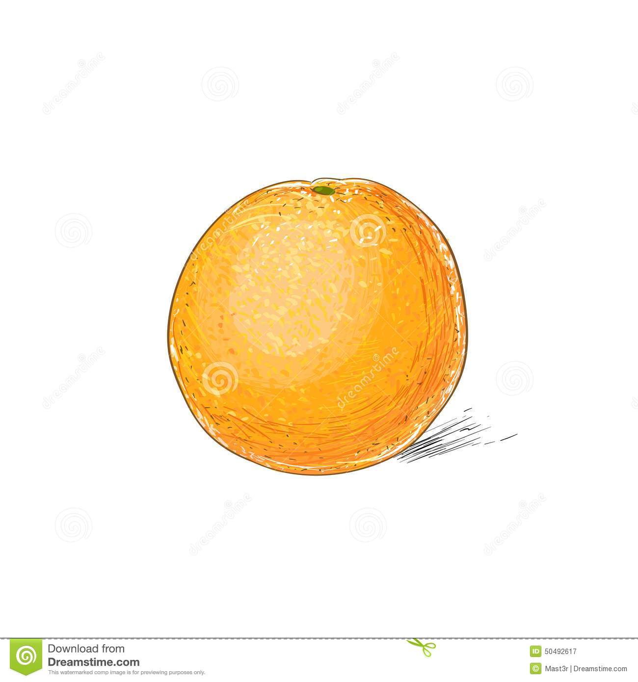 Orange Citrus Fruit Color Sketch Draw Stock Vector ...