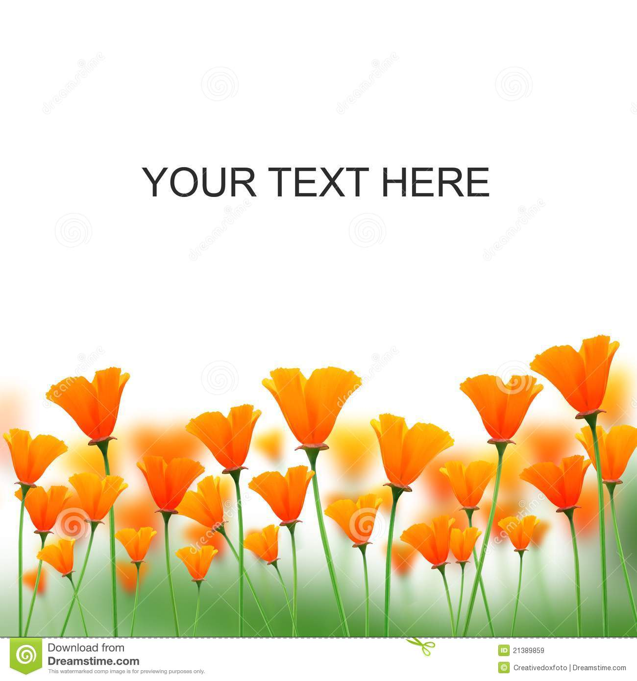 Orange Color Flowers On White Space For Messages Stock Image Image