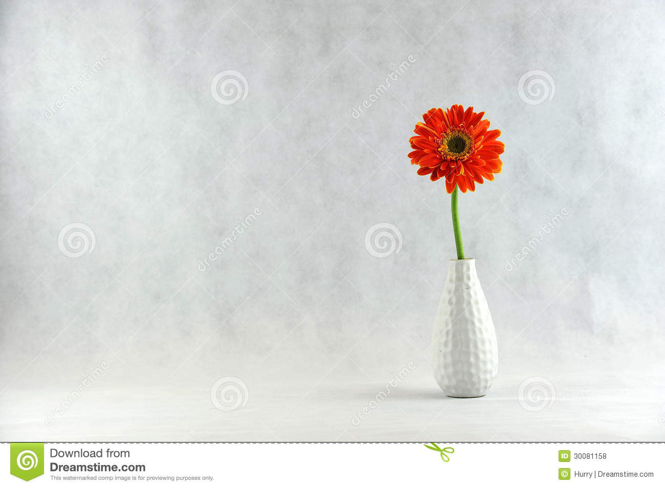 Gerbera Daisy in vase stock photo. Image of growth ...