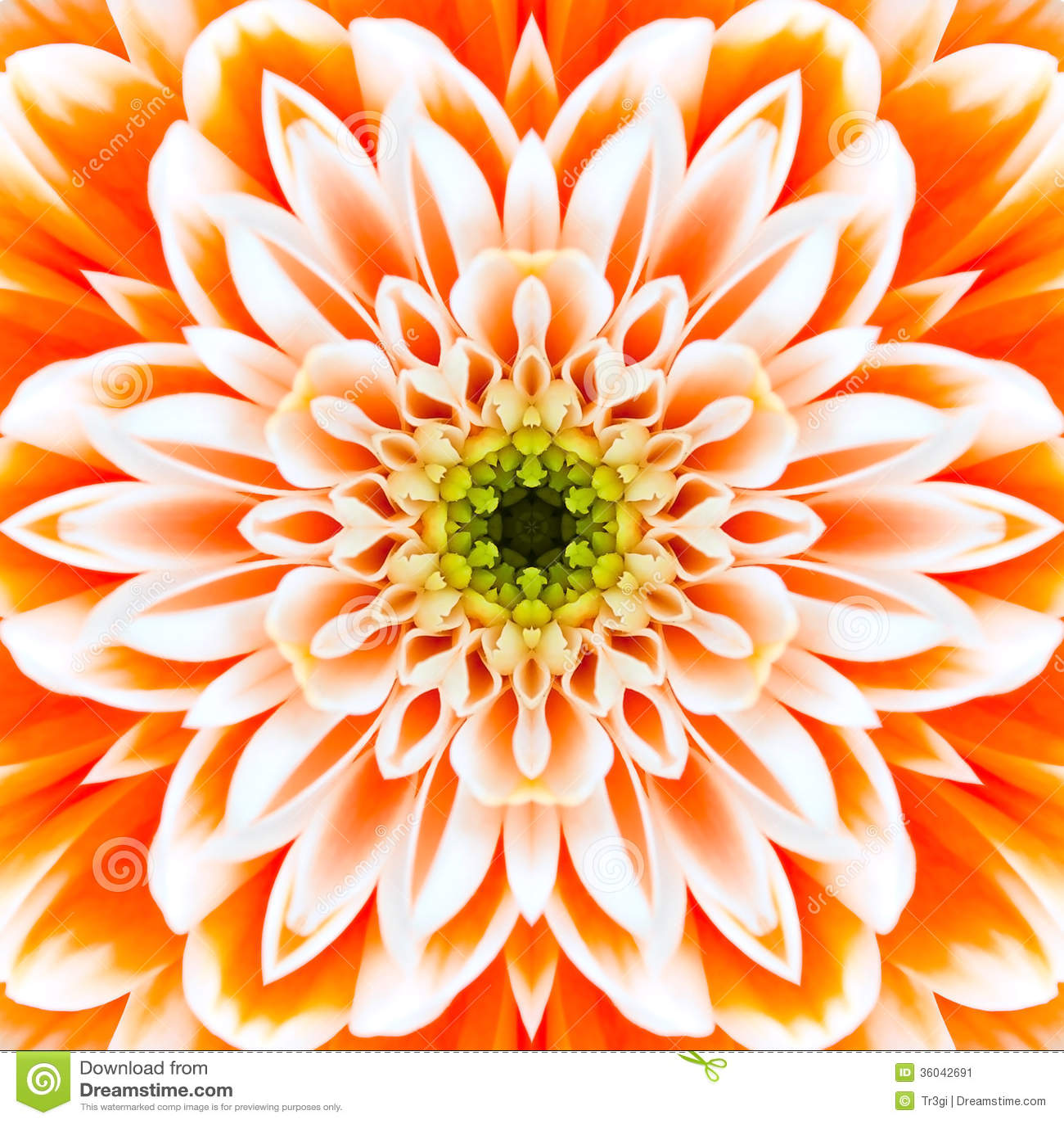 Orange Concentric Flower Center. Mandala Kaleidoscopic
