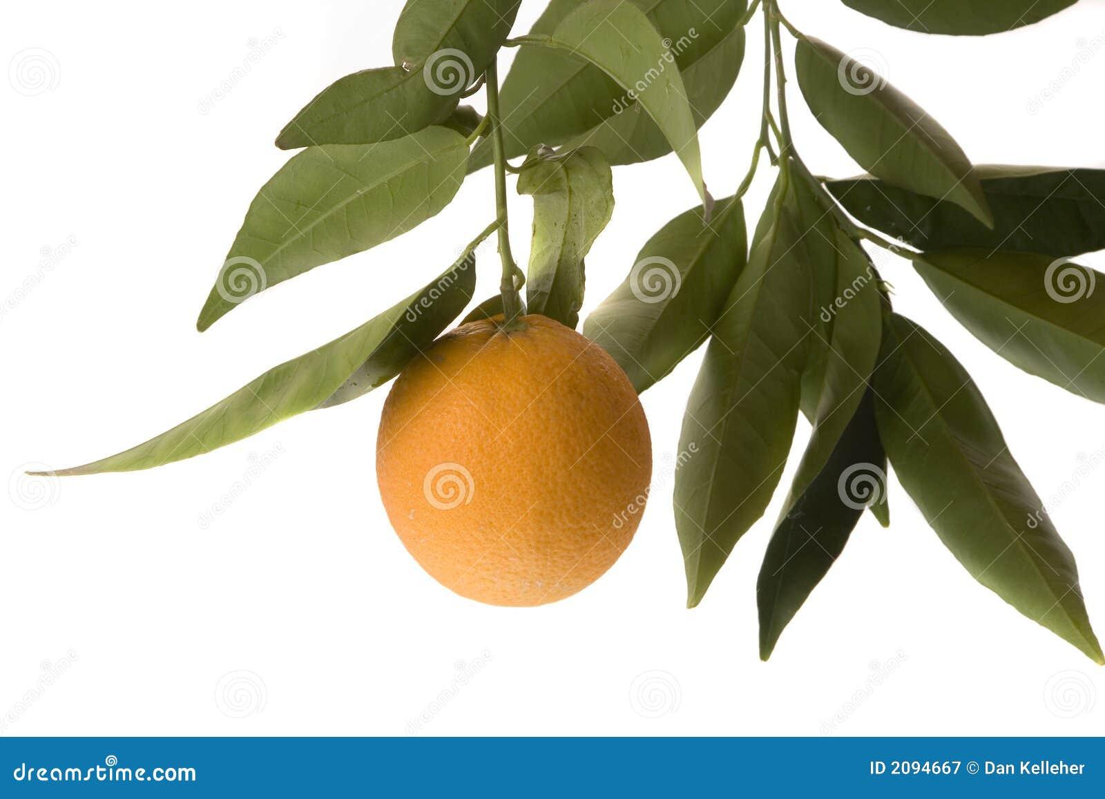 Orange d isolement avec des lames