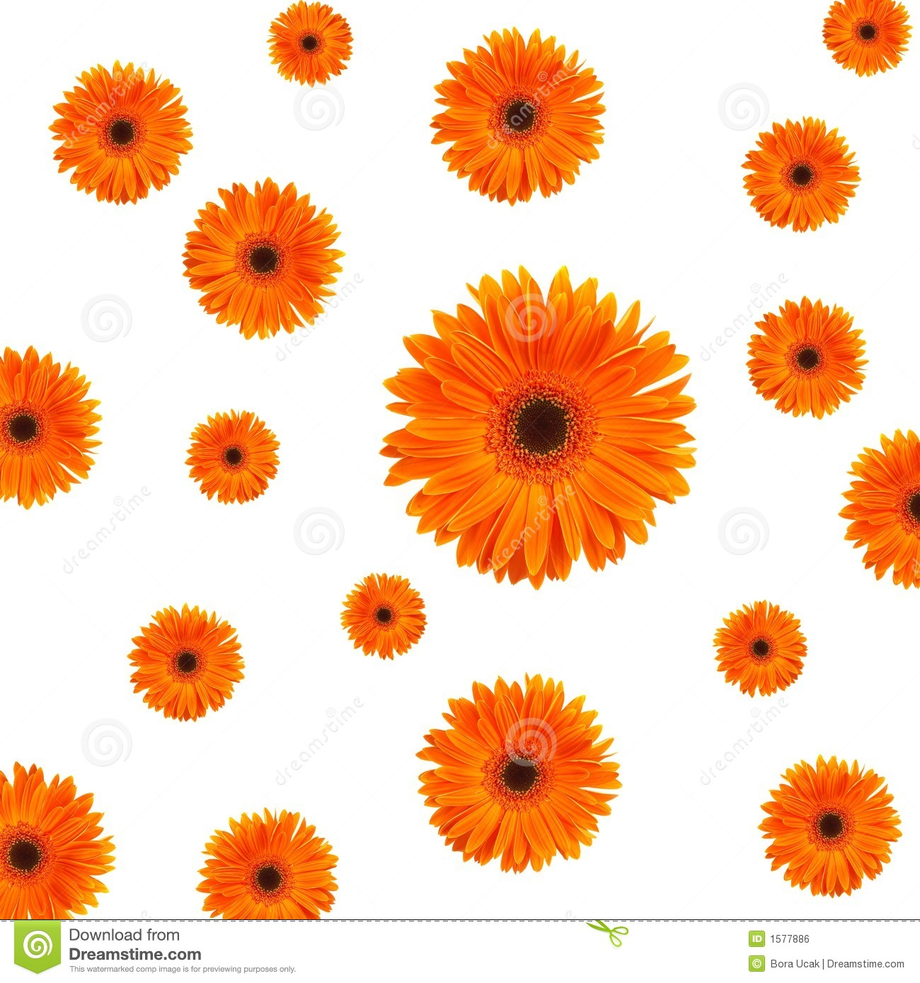Orange Daisy Background Royalty Free Stock Image