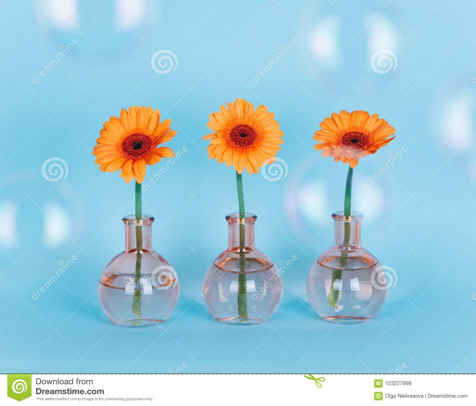 Orange Daisy Flower In A Vase On Trendy Background. Stock ...