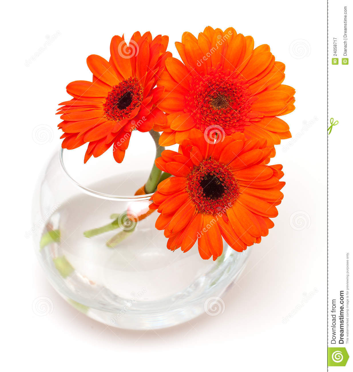 Orange Daisy Flowers In A Glass Vase Royalty Free Stock