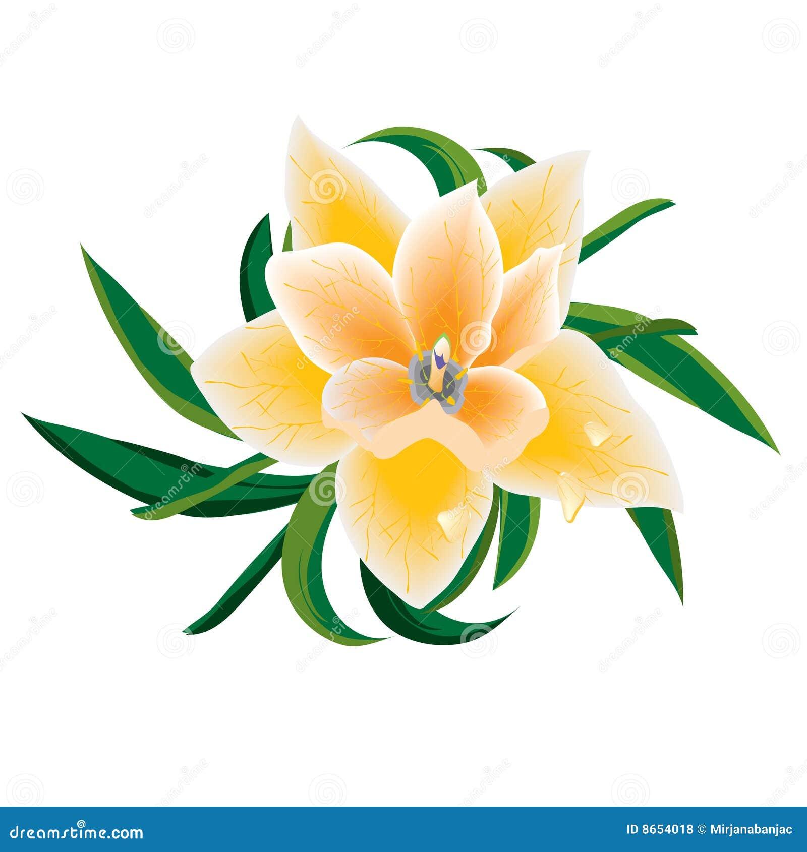 Orange de fleur