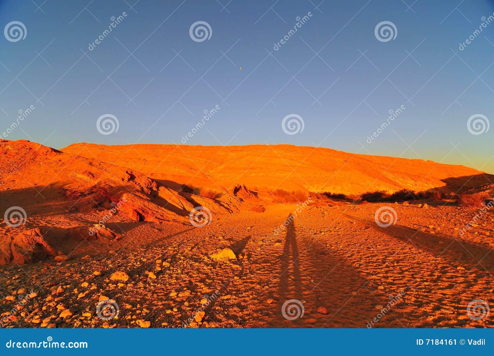 Orange desert mounts