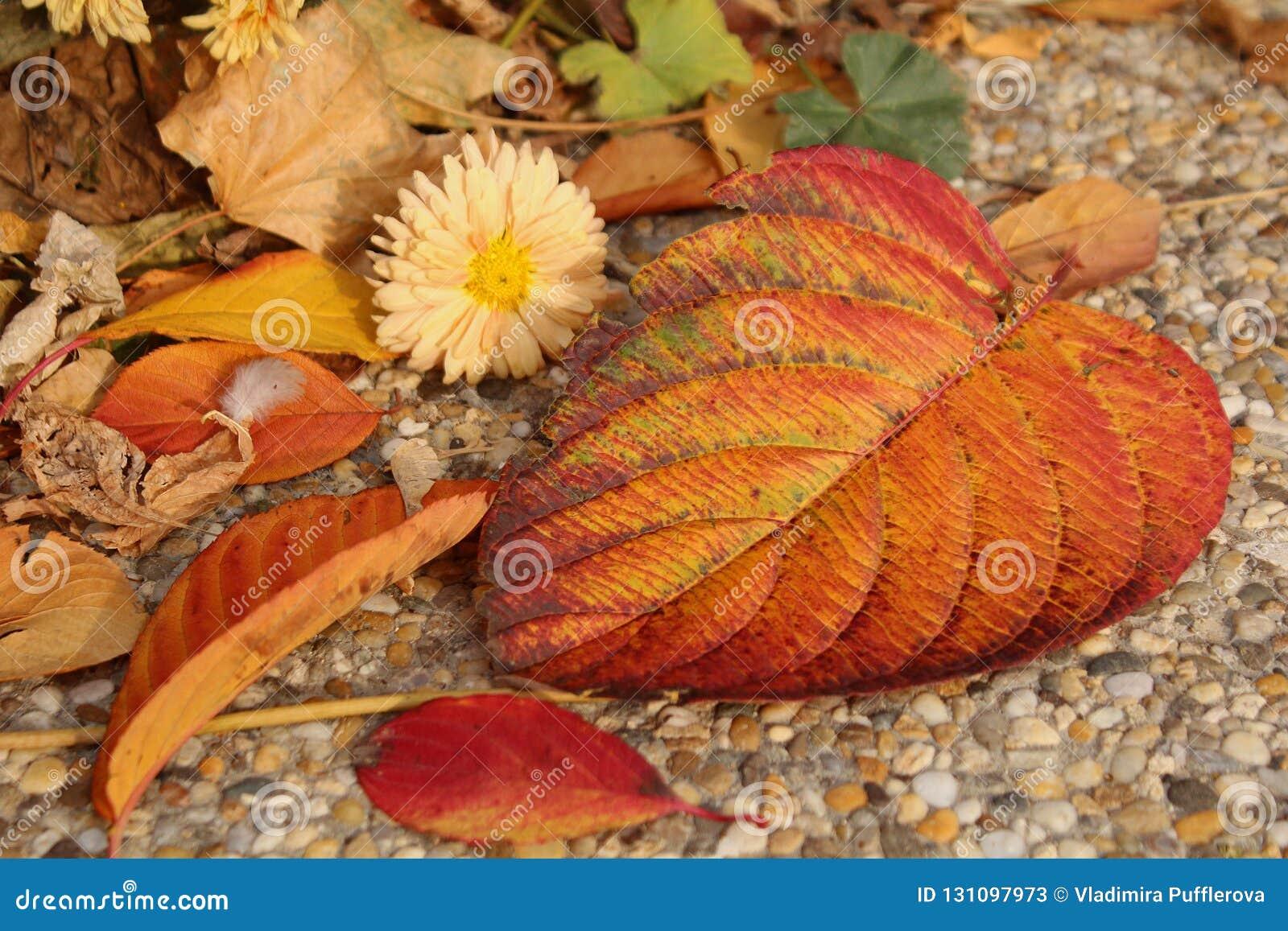 Orange fallen leaves and autumn flowers