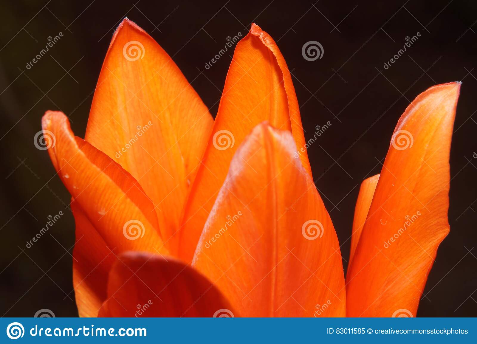 Download Orange Flower in Bloom stock image. Image of petals, flower - 83011585