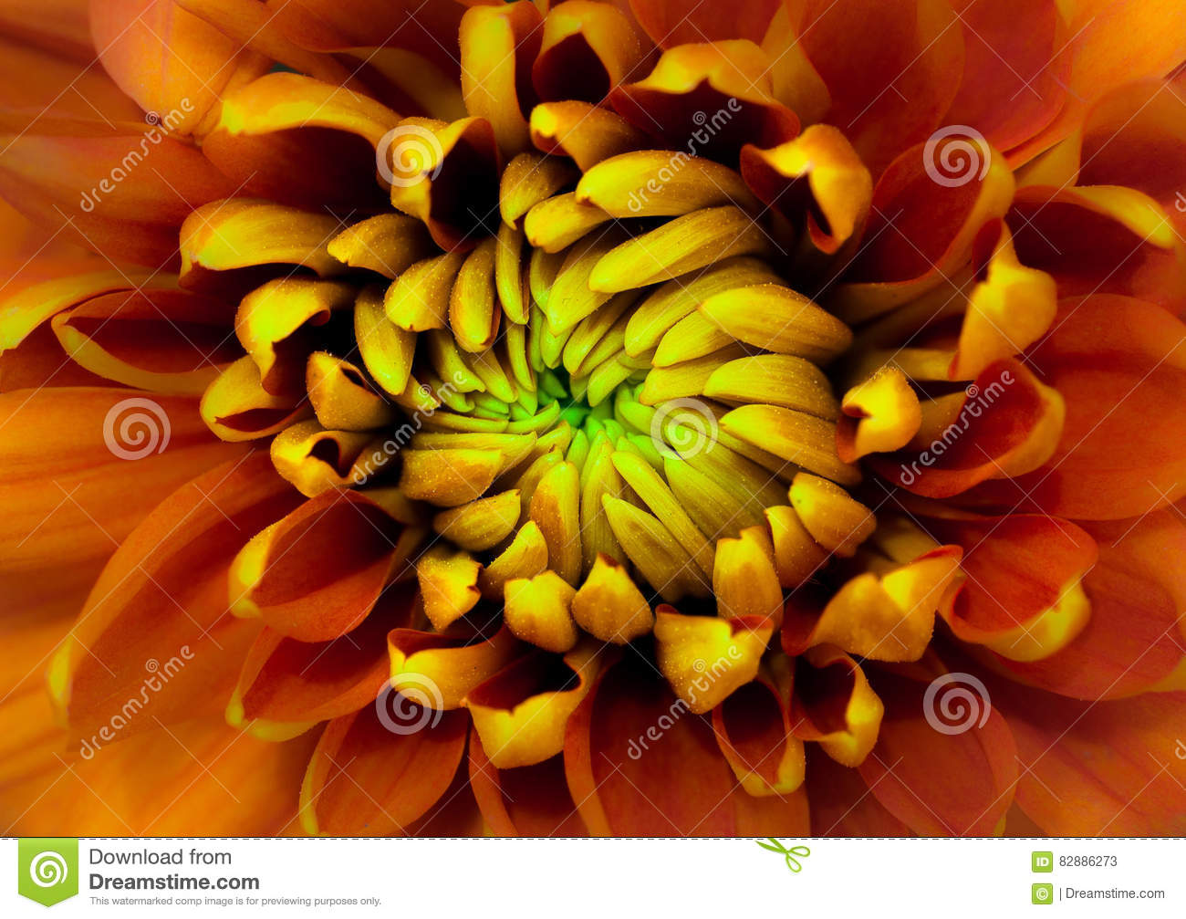 Orange Flower Close Up With Yellow And Green Center Petals Stock