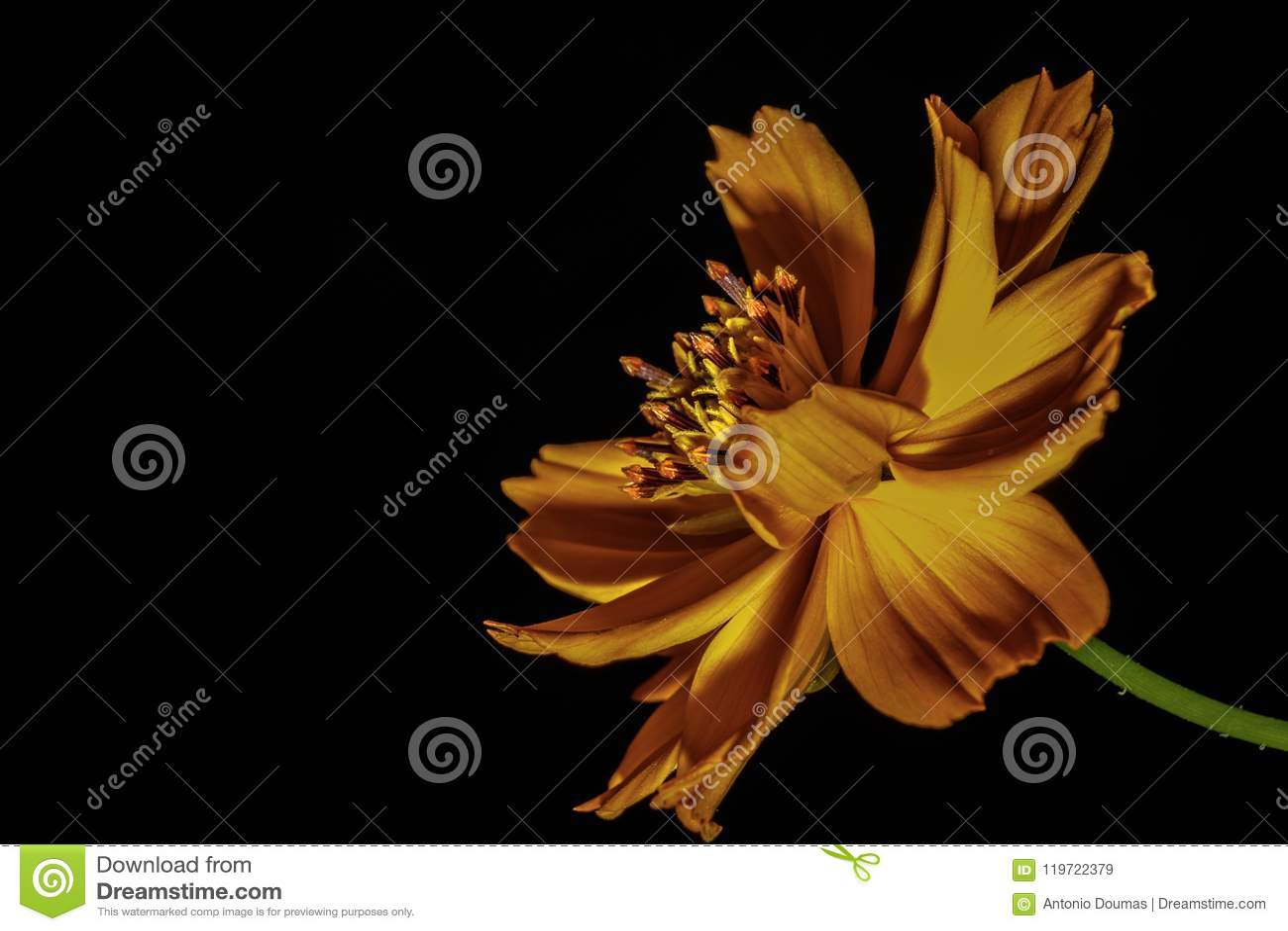 Orange Flower In The Dark Stock Image Image Of Warps 119722379