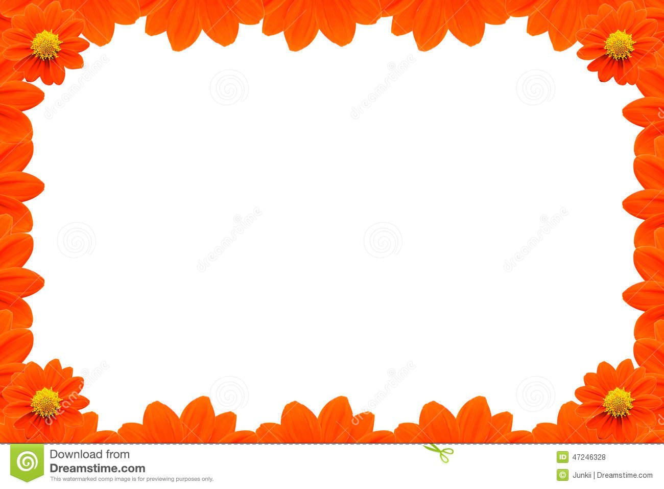 orange flower frame on white background stock photo image of empty