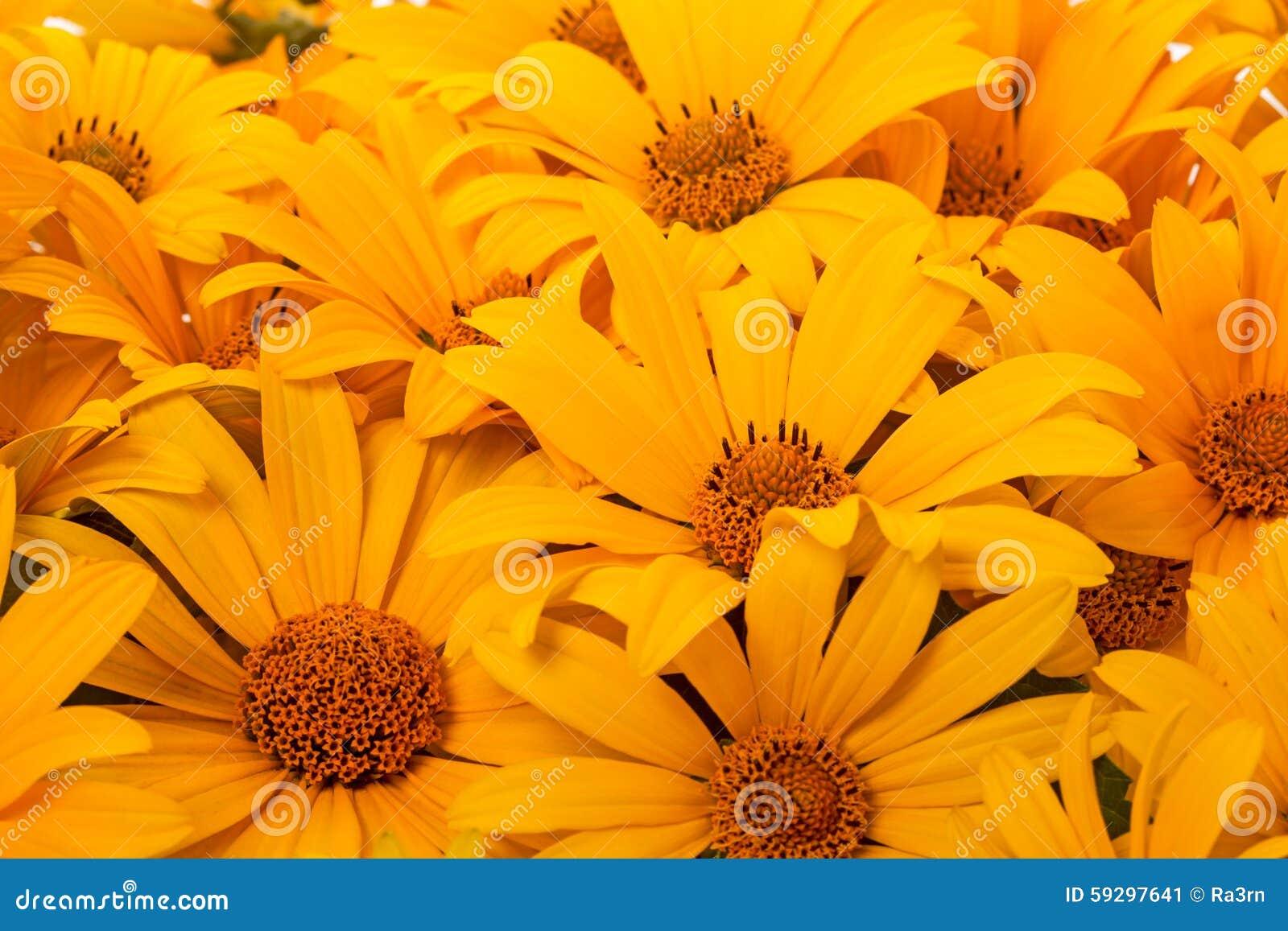 Orange Flower Like A Daisy Stock Image Image Of Daisy 59297641