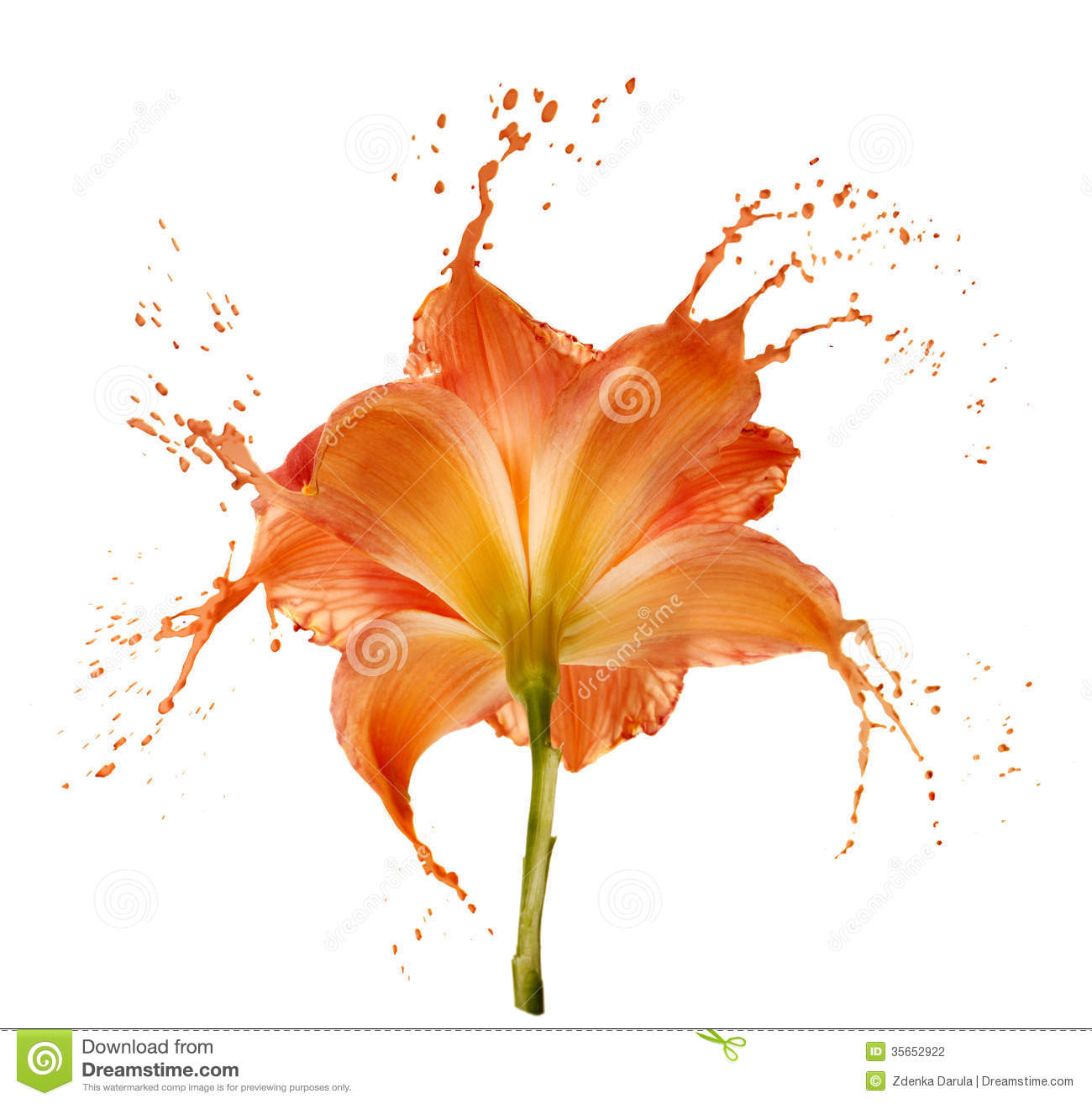 Orange Flower Splashes Stock Photography