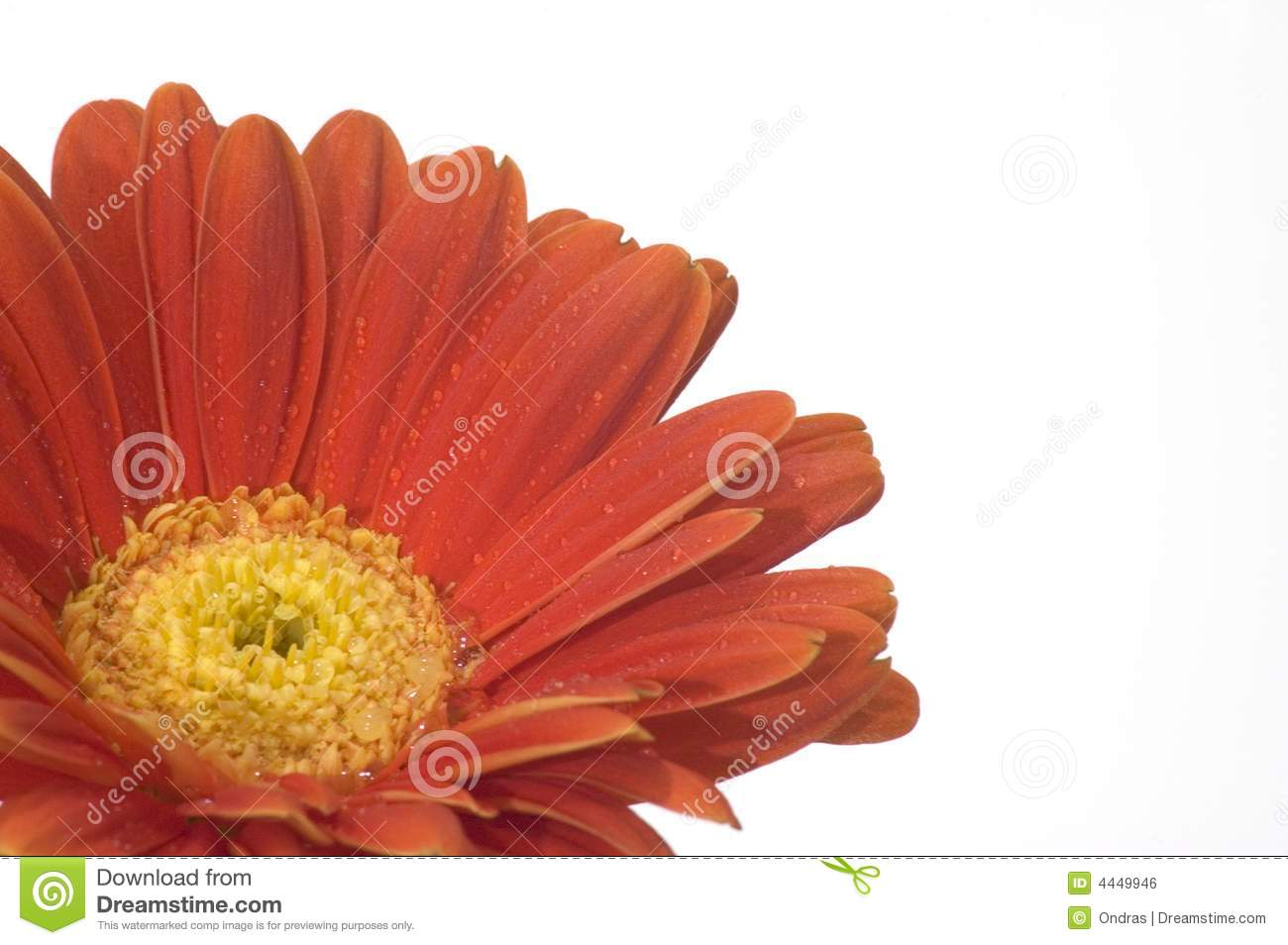 Orange Flower With Yellow Center Stock Photo Image Of Petals