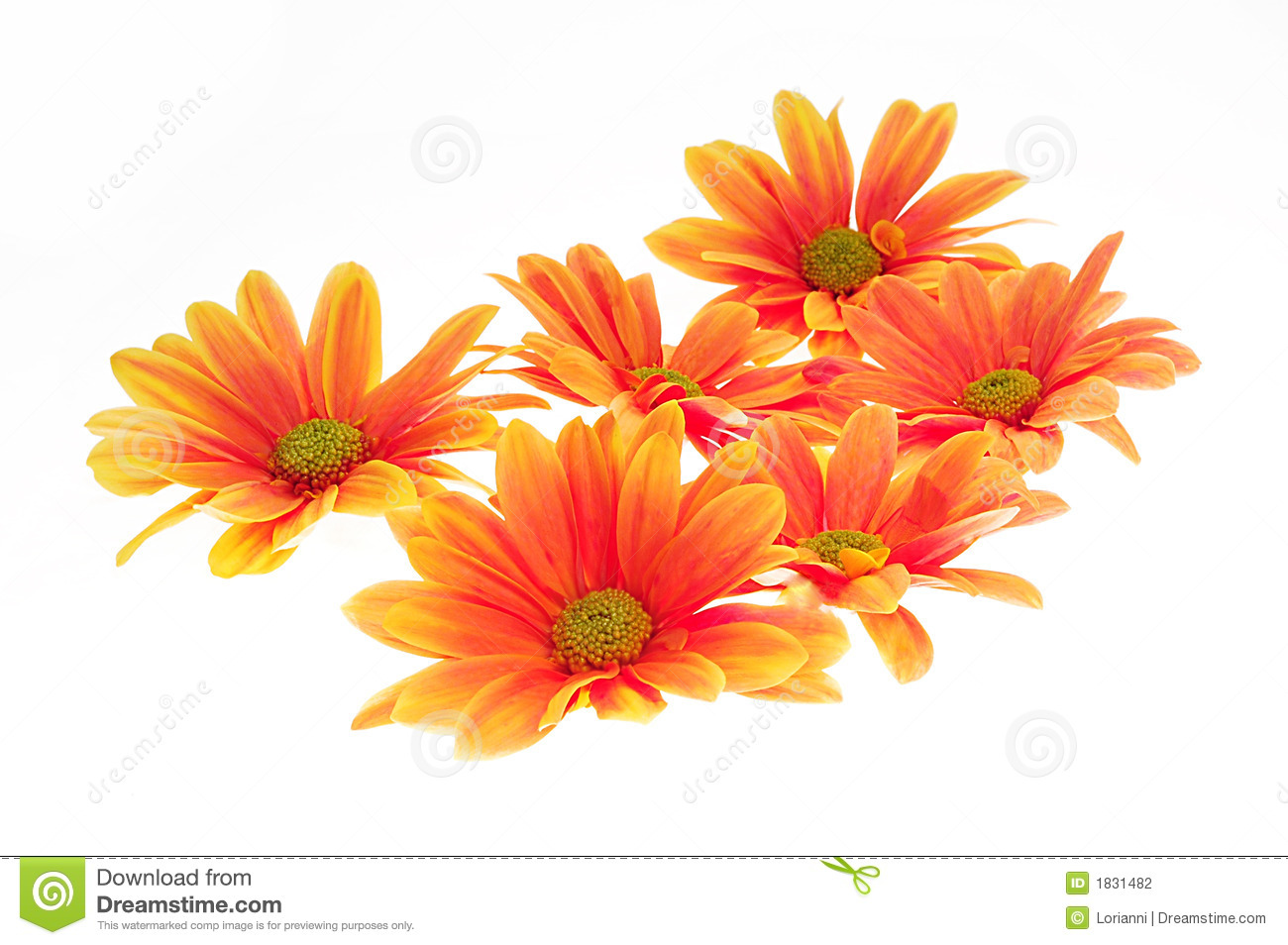 Orange flowers stock photo. Image of floral, green, give ...