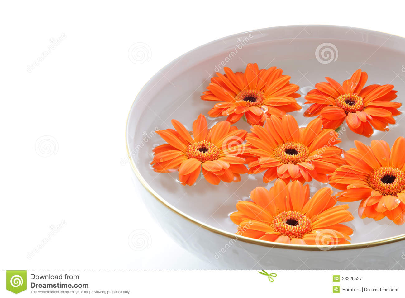 Orange Flowers Floating In A Bowl With Water Stock Image Image Of