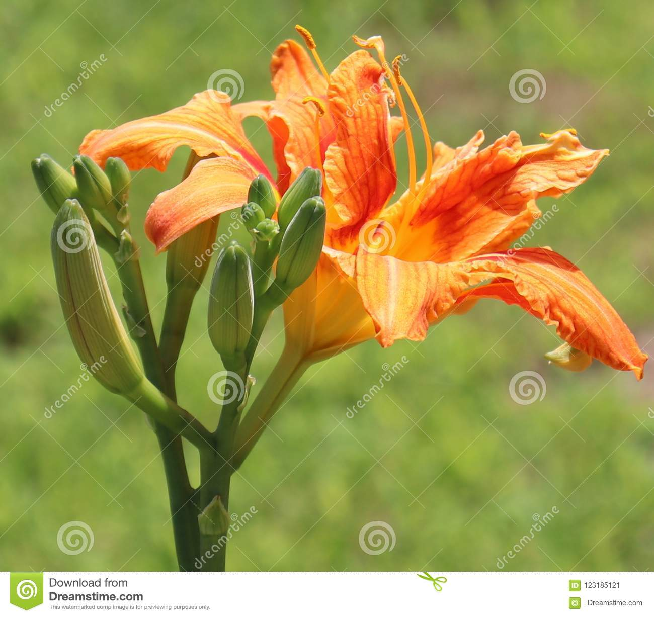 Orange, Flowers, Outside, Blurry background.