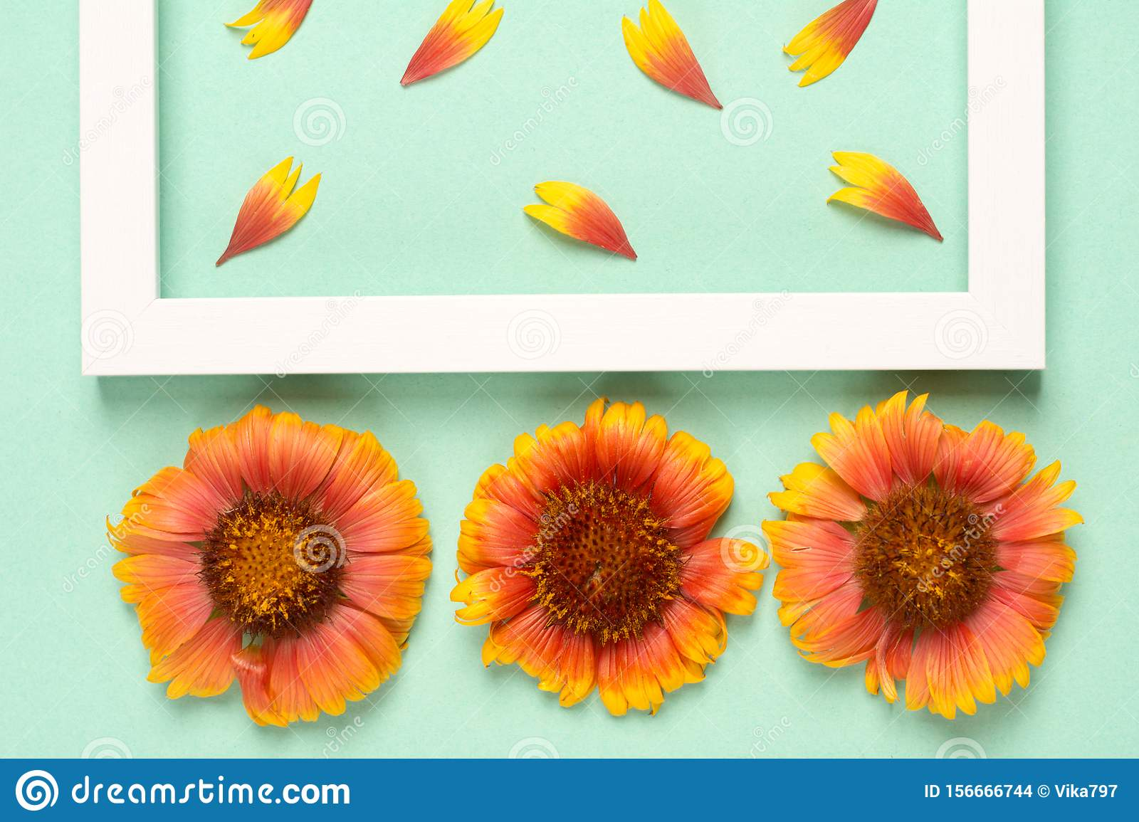 Orange flowers and petals, photo frame on a mint background.
