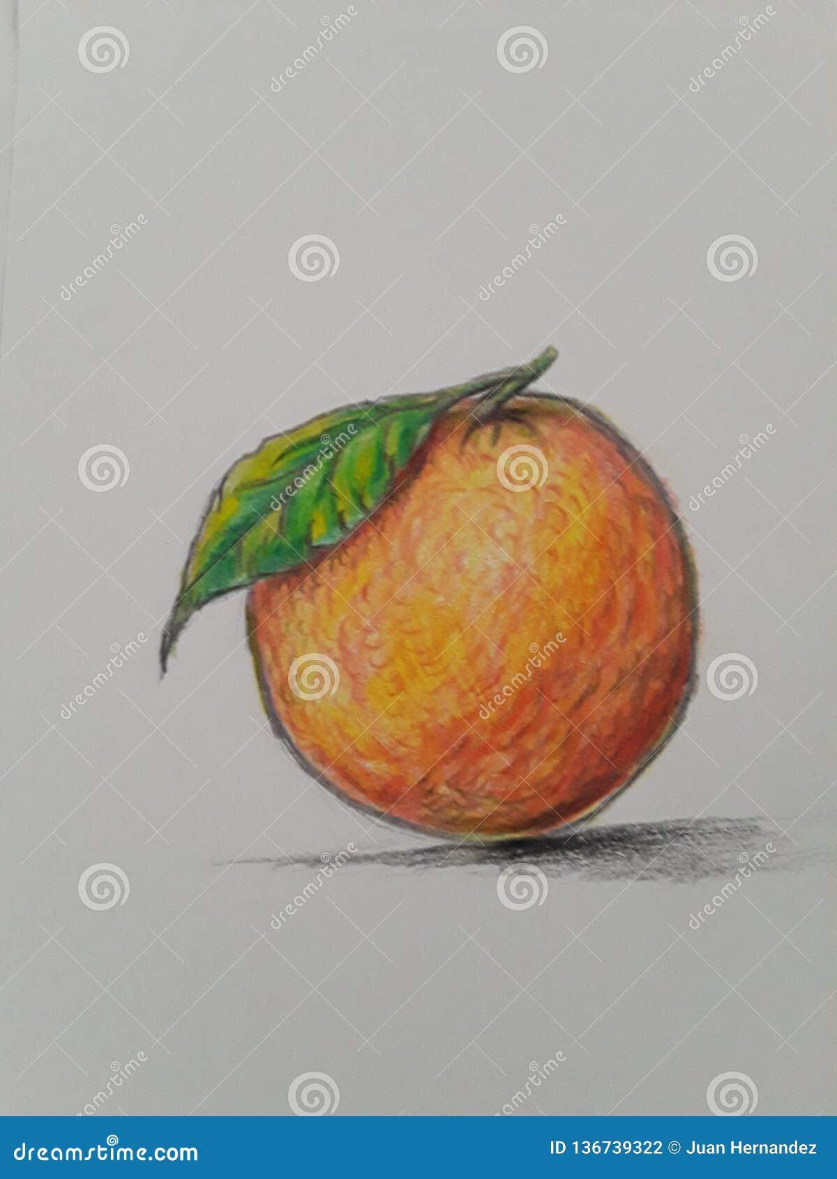 Orange fruit art stock illustration illustration of pencil 136739322