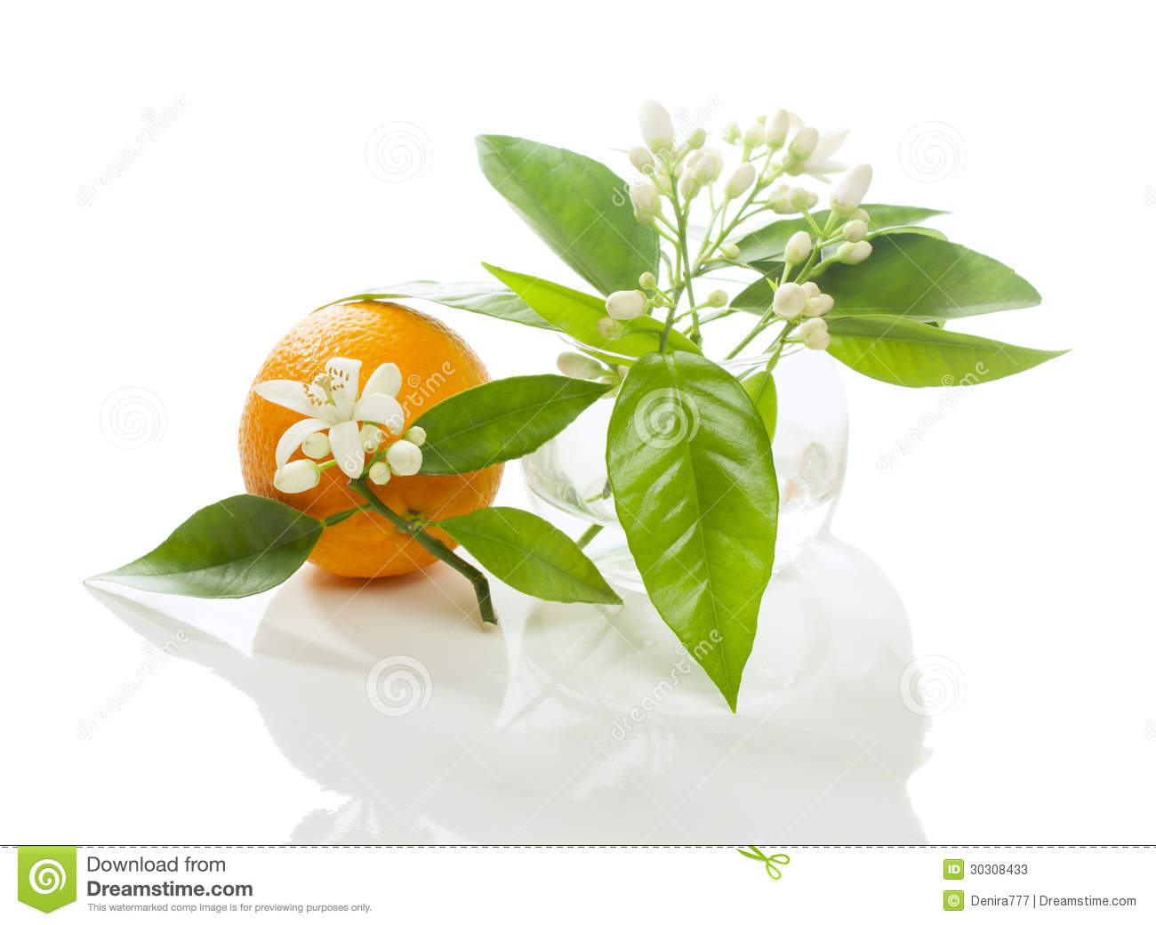 Orange fruit with flower and blossom in a round transparent glass vase ...