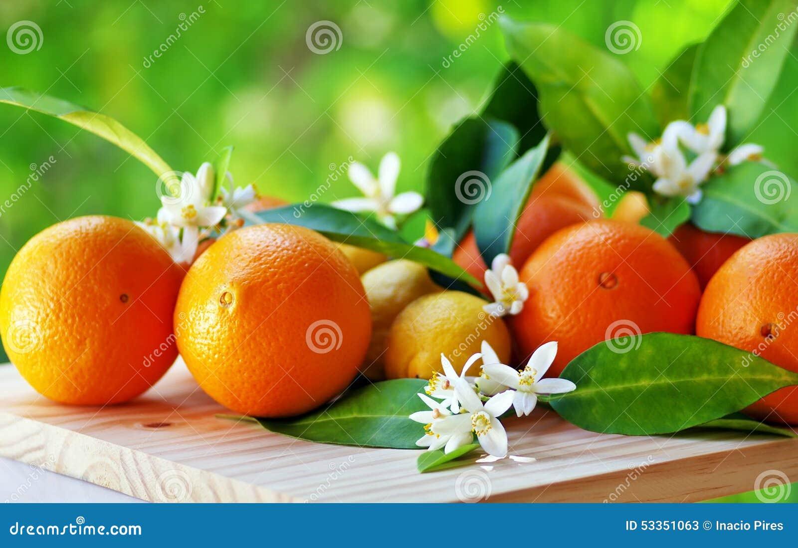 Orange Fruits And Flowers Stock Photo - Image: 53351063