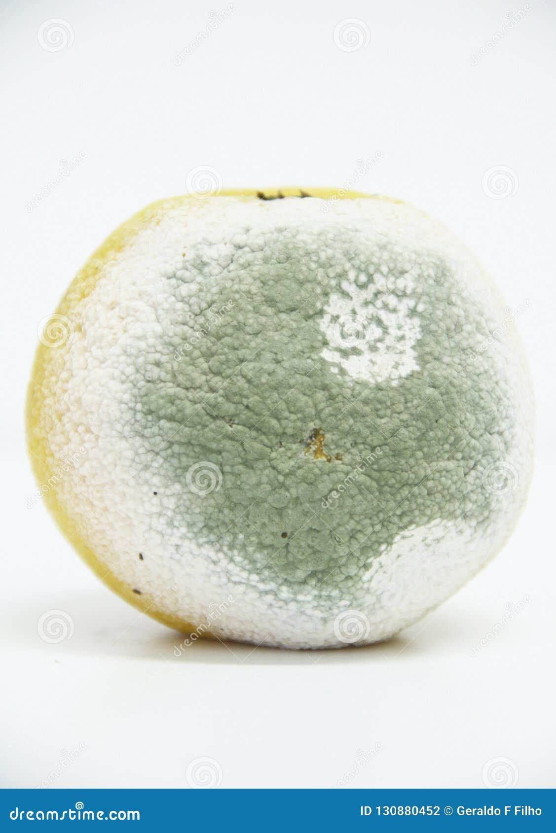 Orange frukt isolerad detalj São Paulo Brazil för funghi för form för bakgrundsfrukt healthful