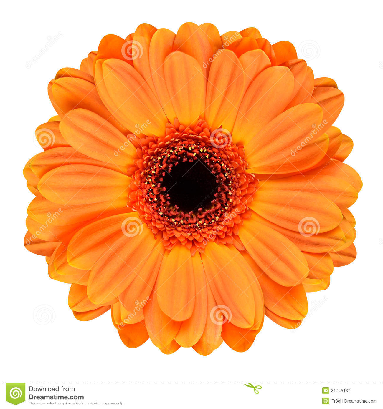Bunch of lavender flowers on white background stock photo image orange gerbera flower isolated on white royalty free stock photography dhlflorist Image collections
