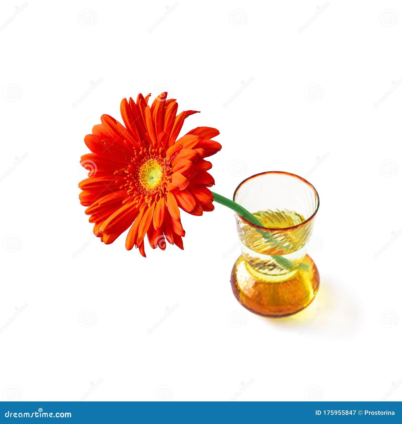 Orange Gerbera In Vase Isolated On White Background For ...