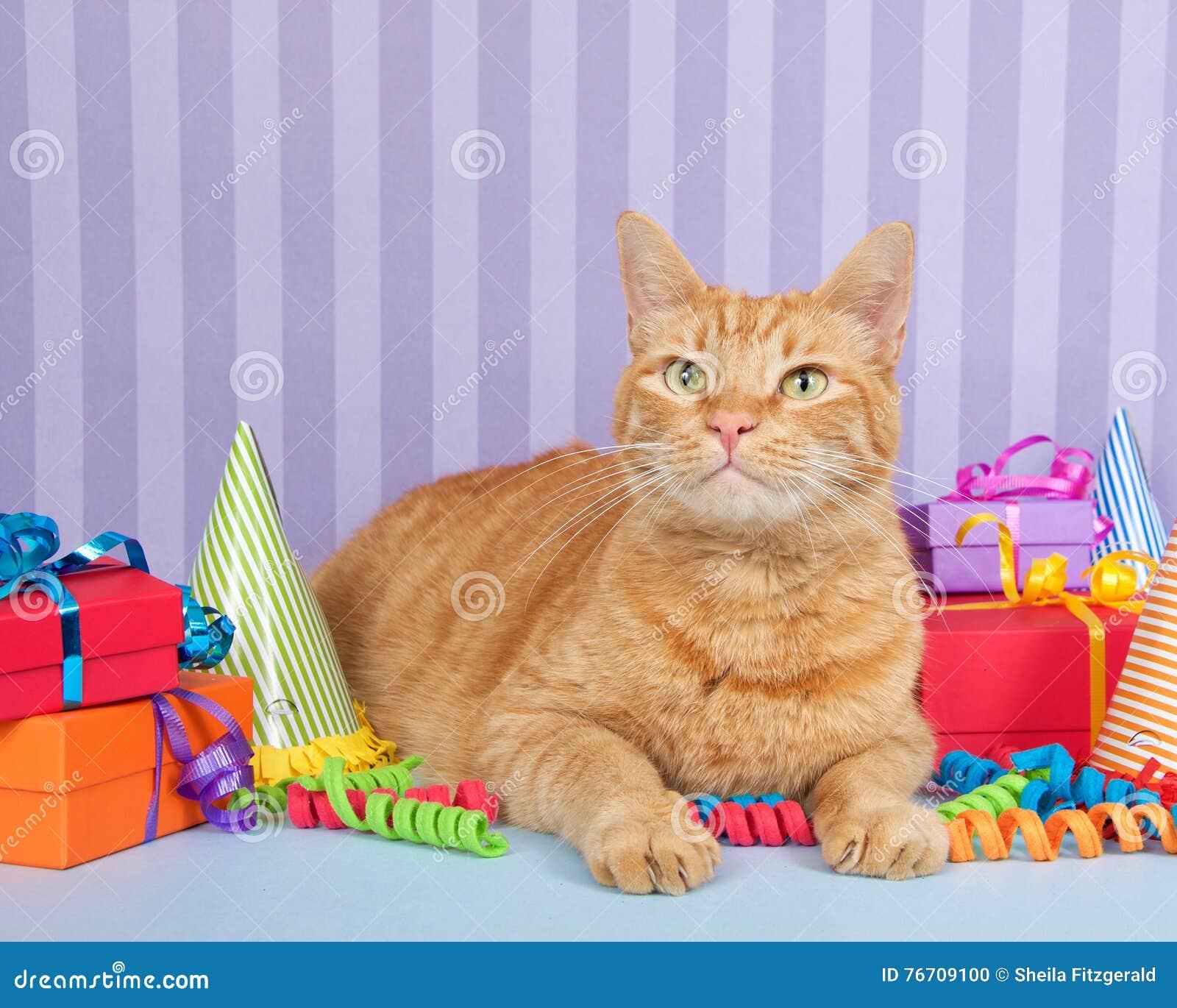 Birthday Orange Cat: Orange Ginger Tabby Cat Sitting With Birthday Presents