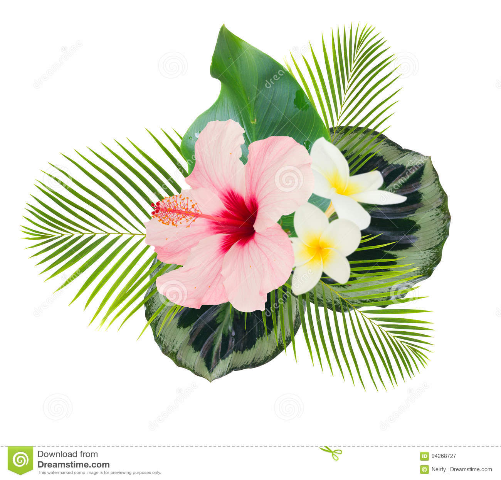 Orange Hibiscus Flower Stock Illustration Illustration Of