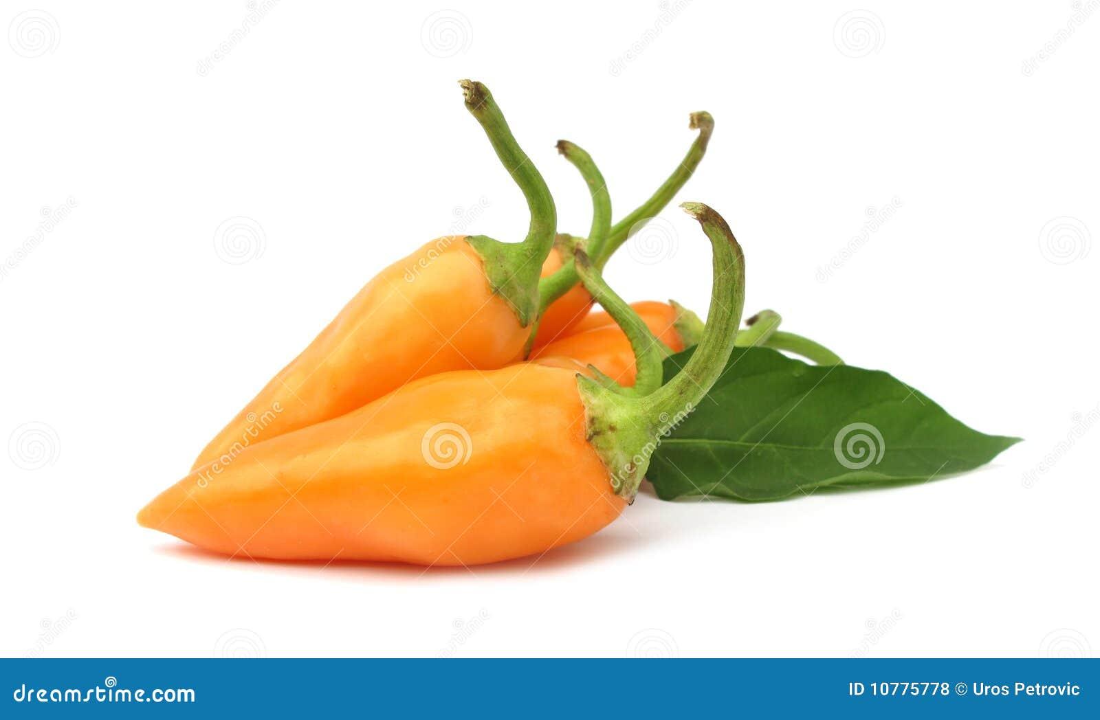 Orange hot chili peppers paprika
