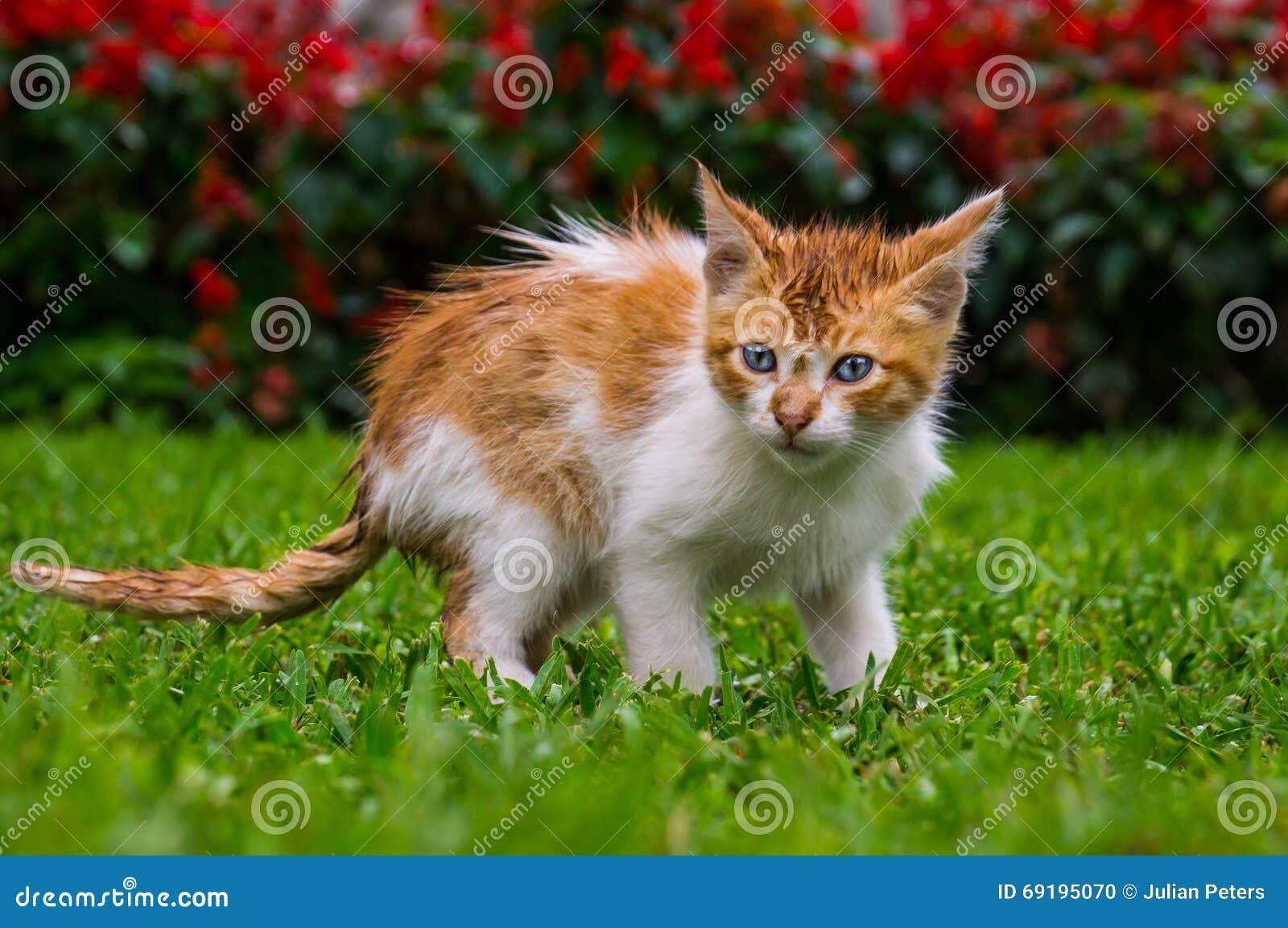 Orange Kätzchenkatze, die im Gras in einem Park sitzt