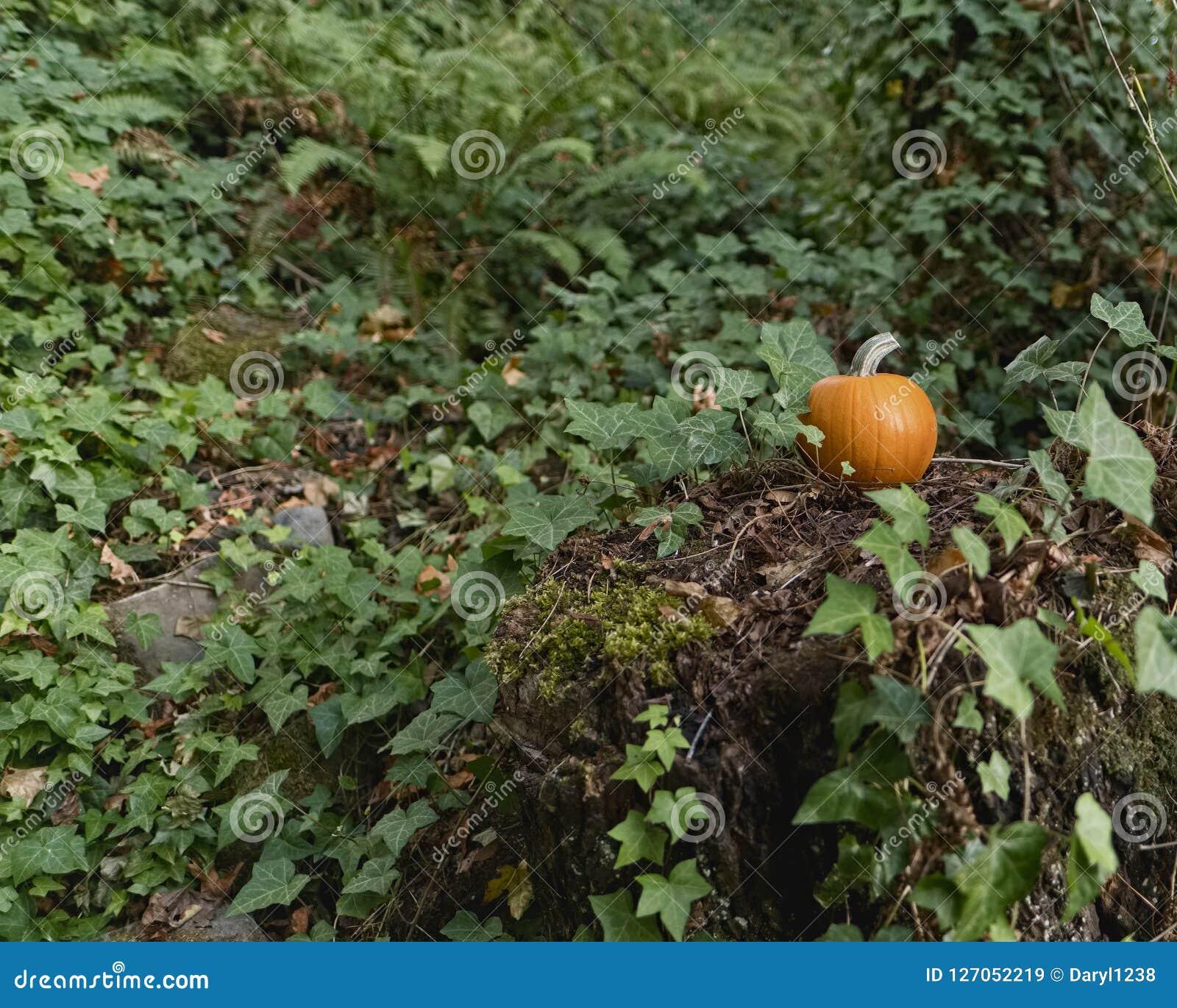 Orange Kürbis, der auf einem Stumpf im Wald mit den Farnen und Efeu umgeben ihn sitzt