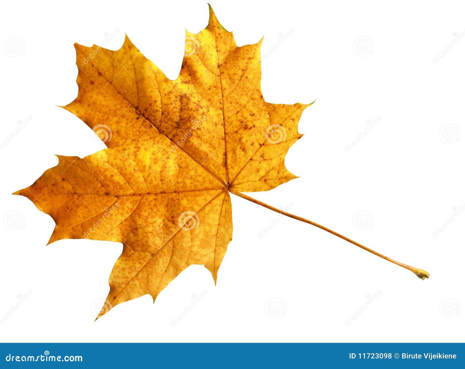Orange Leaf Royalty Free Stock Photos Image 11723098