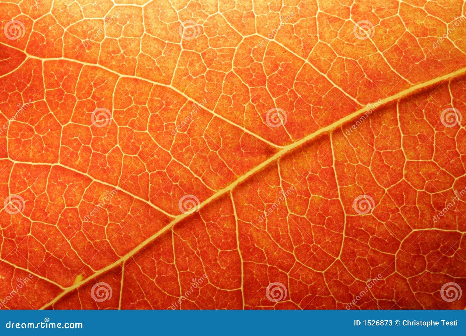Orange leaf closeup stock photos image 1526873 for Amber leaf