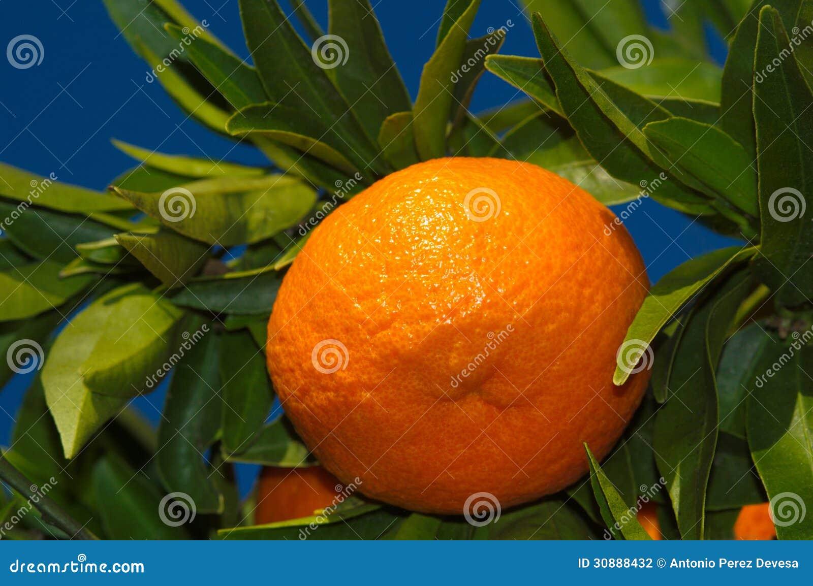 orange jpg deep blue - photo #20