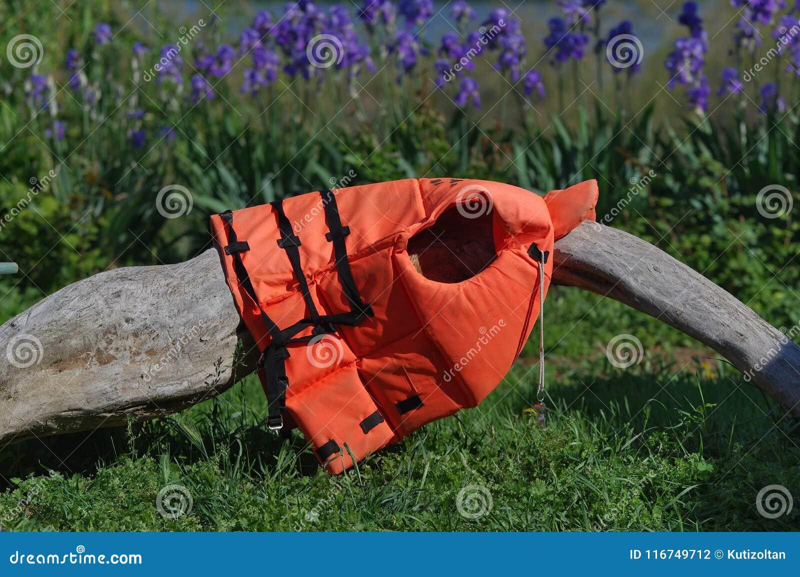 Orange life vest on the log