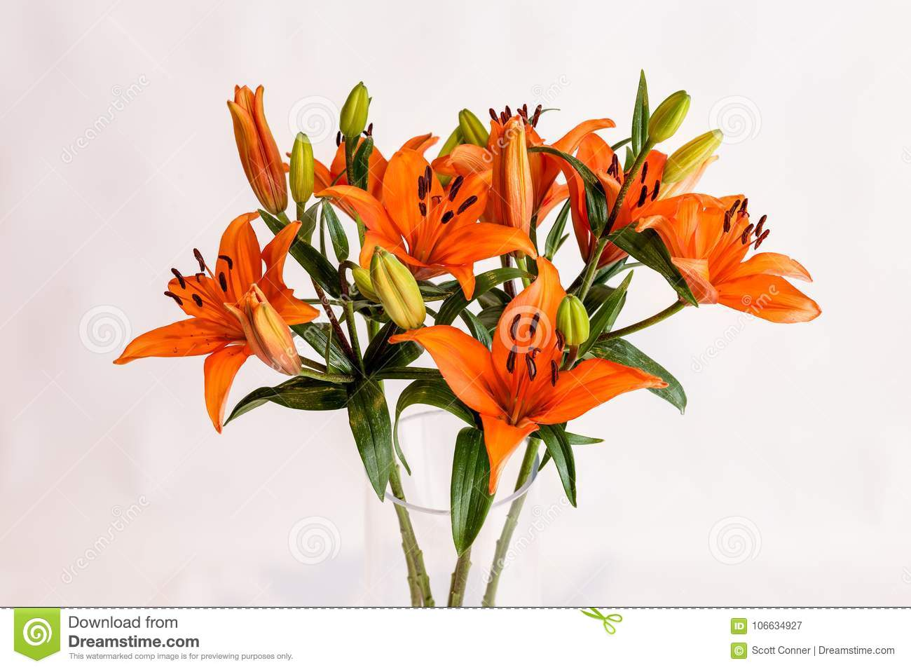 fe448a2f8af17 Long stem orange and black spotted lillys in a clear vase on a white back  ground