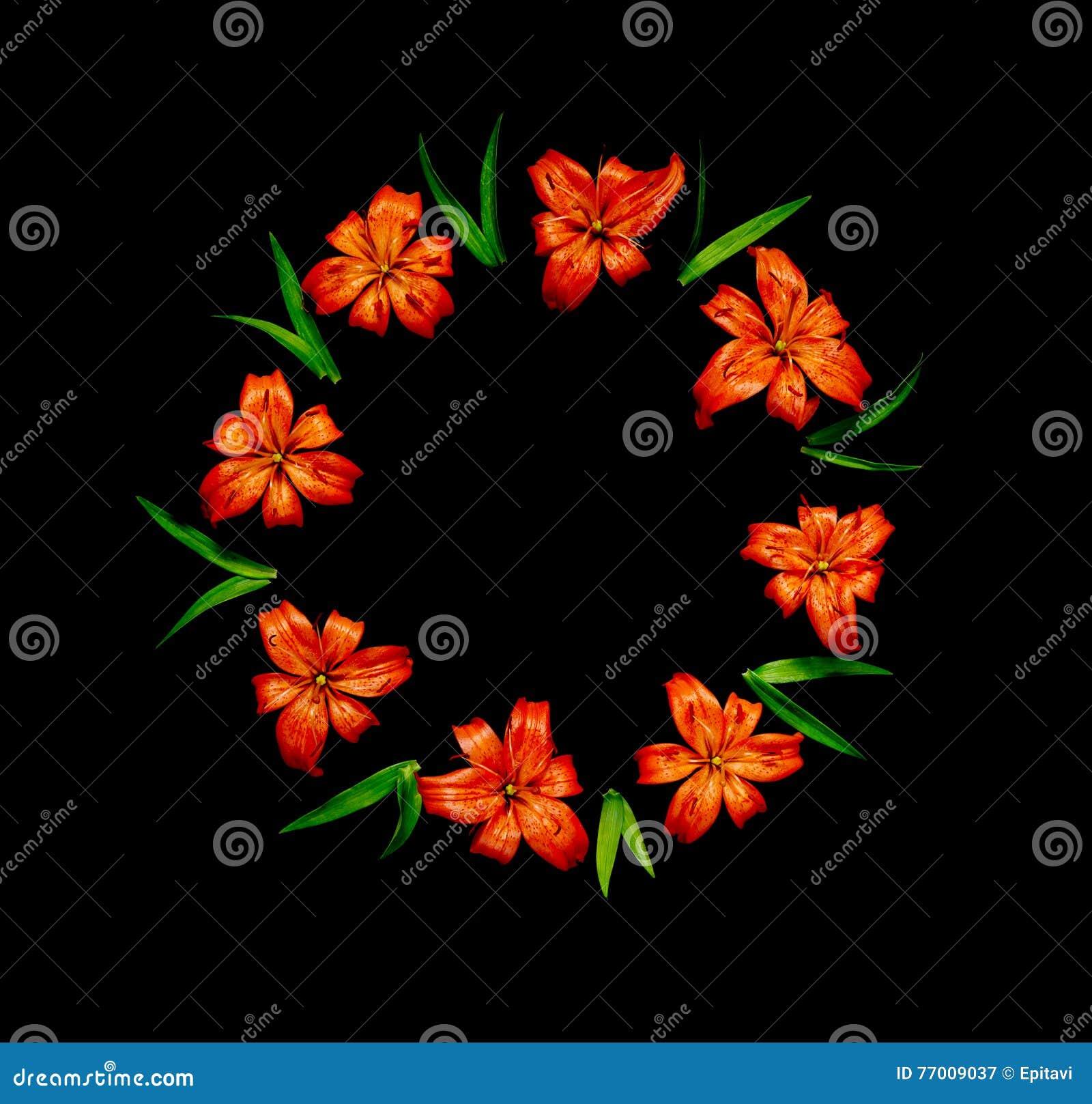 11 Gorgeous Ͽ� Black� Blooms: Orange Lily On Black Background Stock Photo