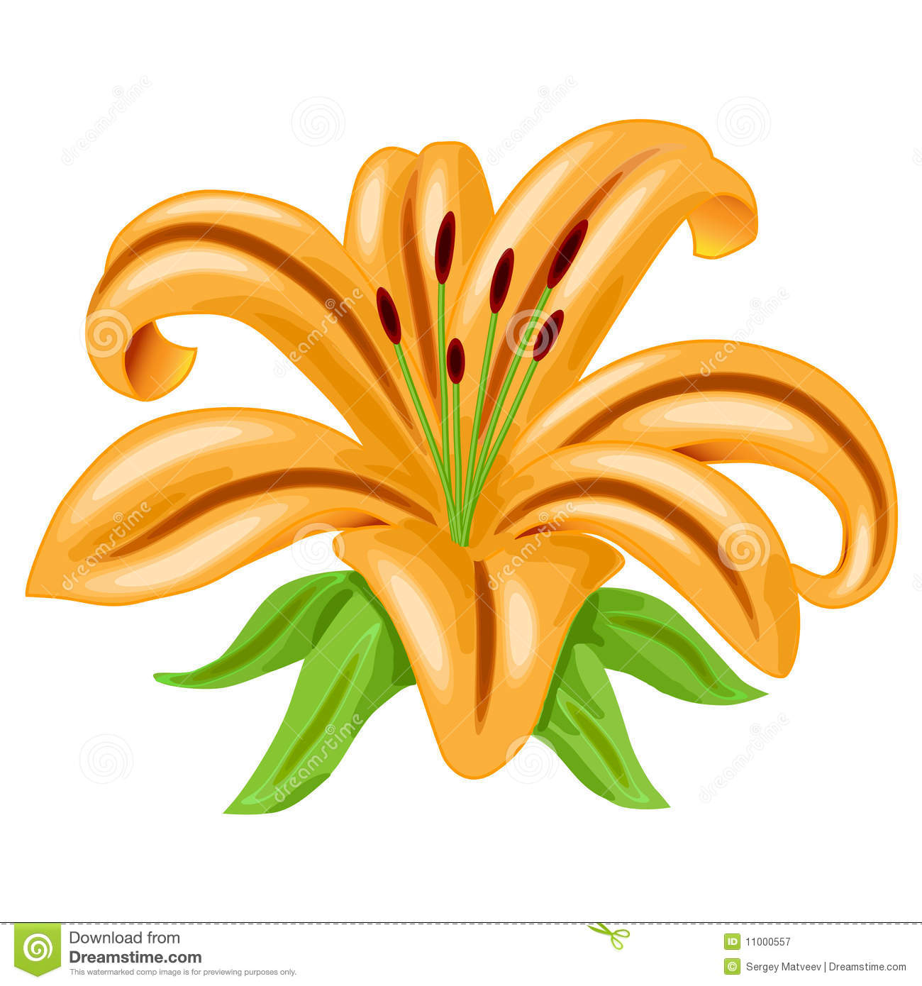 Orange Lily Flower Vector Royalty Free Stock Photography ...