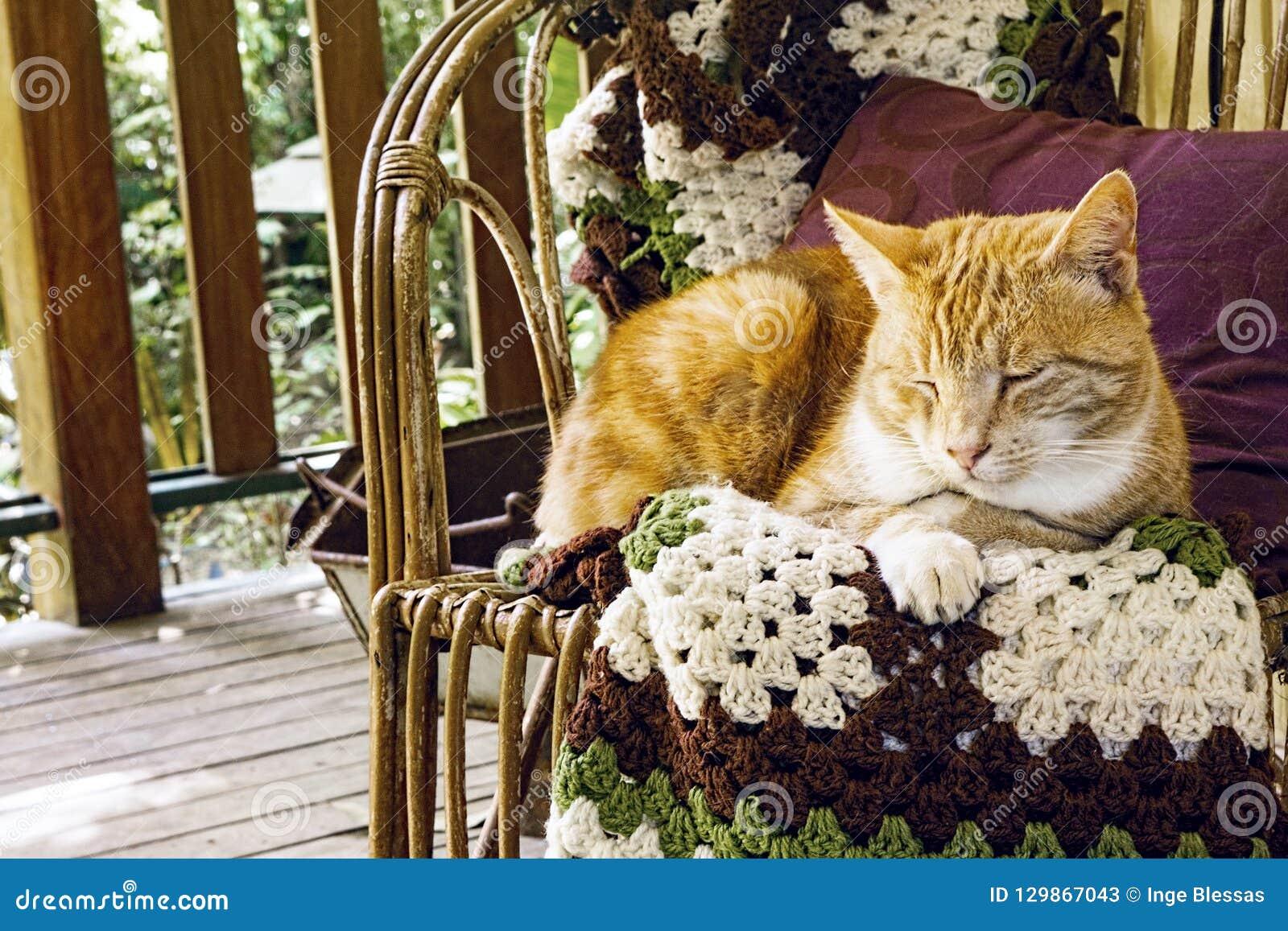 Orange marmalade cat on chair