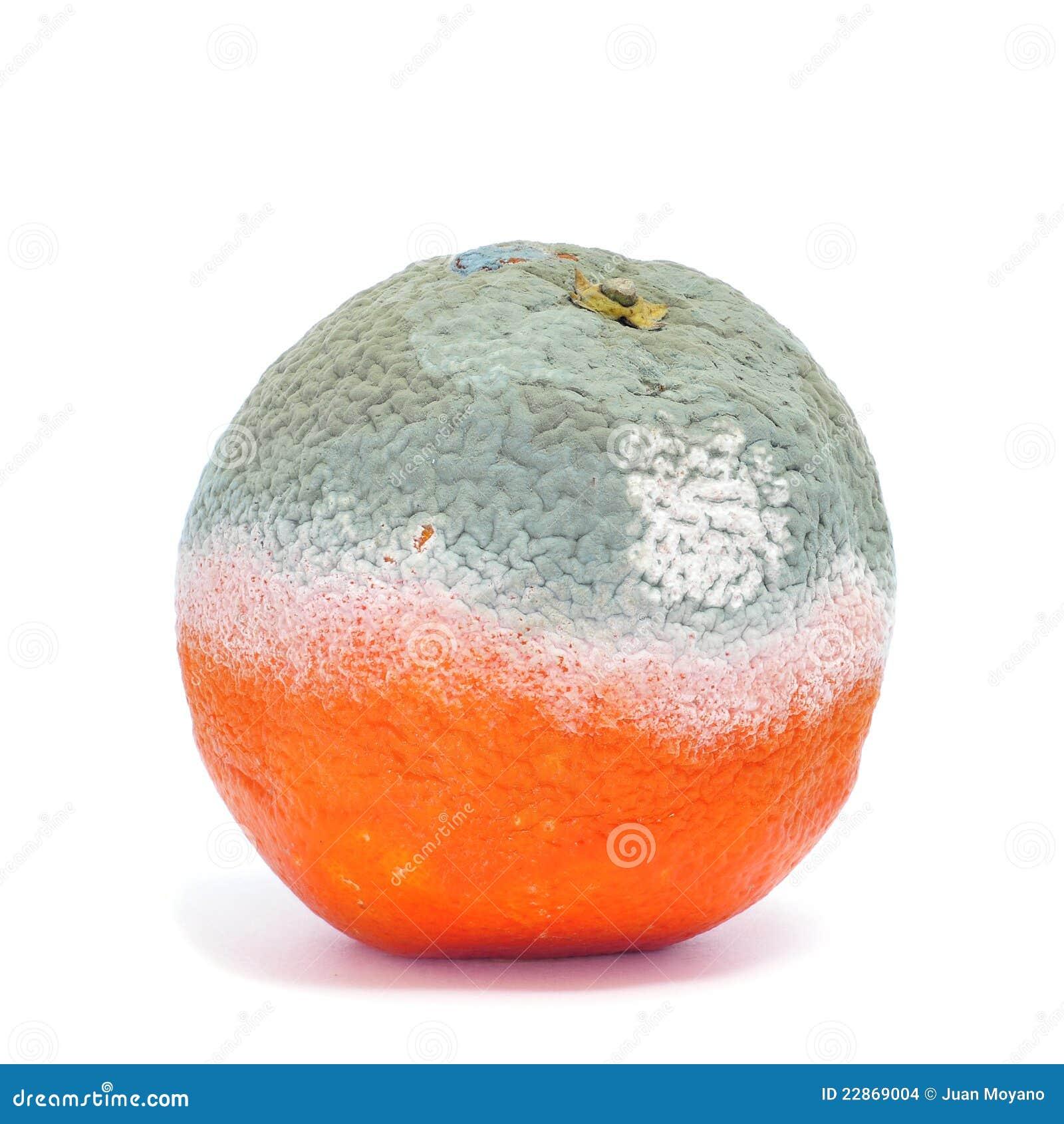 orange-moisie-22869004.jpg