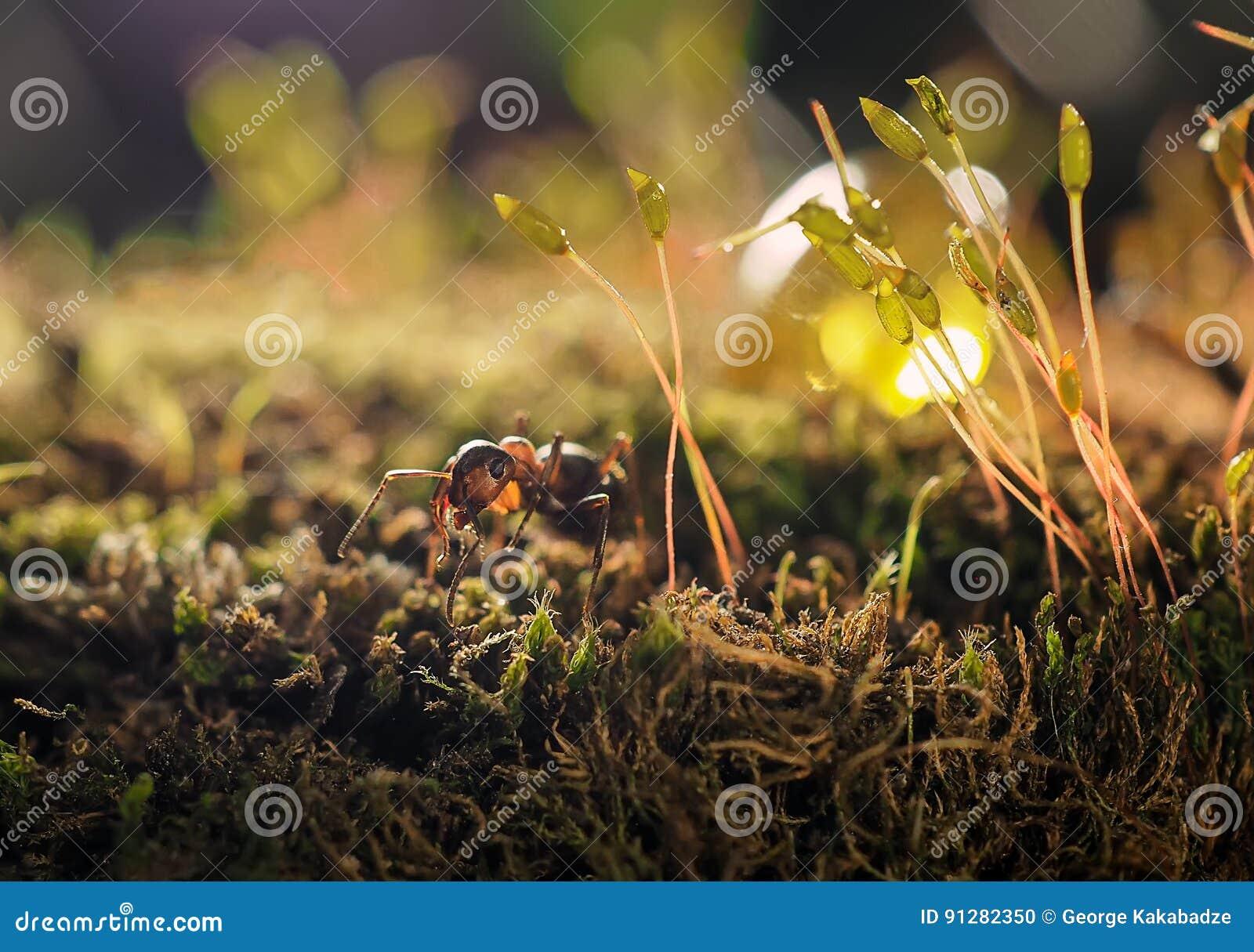 Orange myra på grön mossa medan liten värld för utforskare