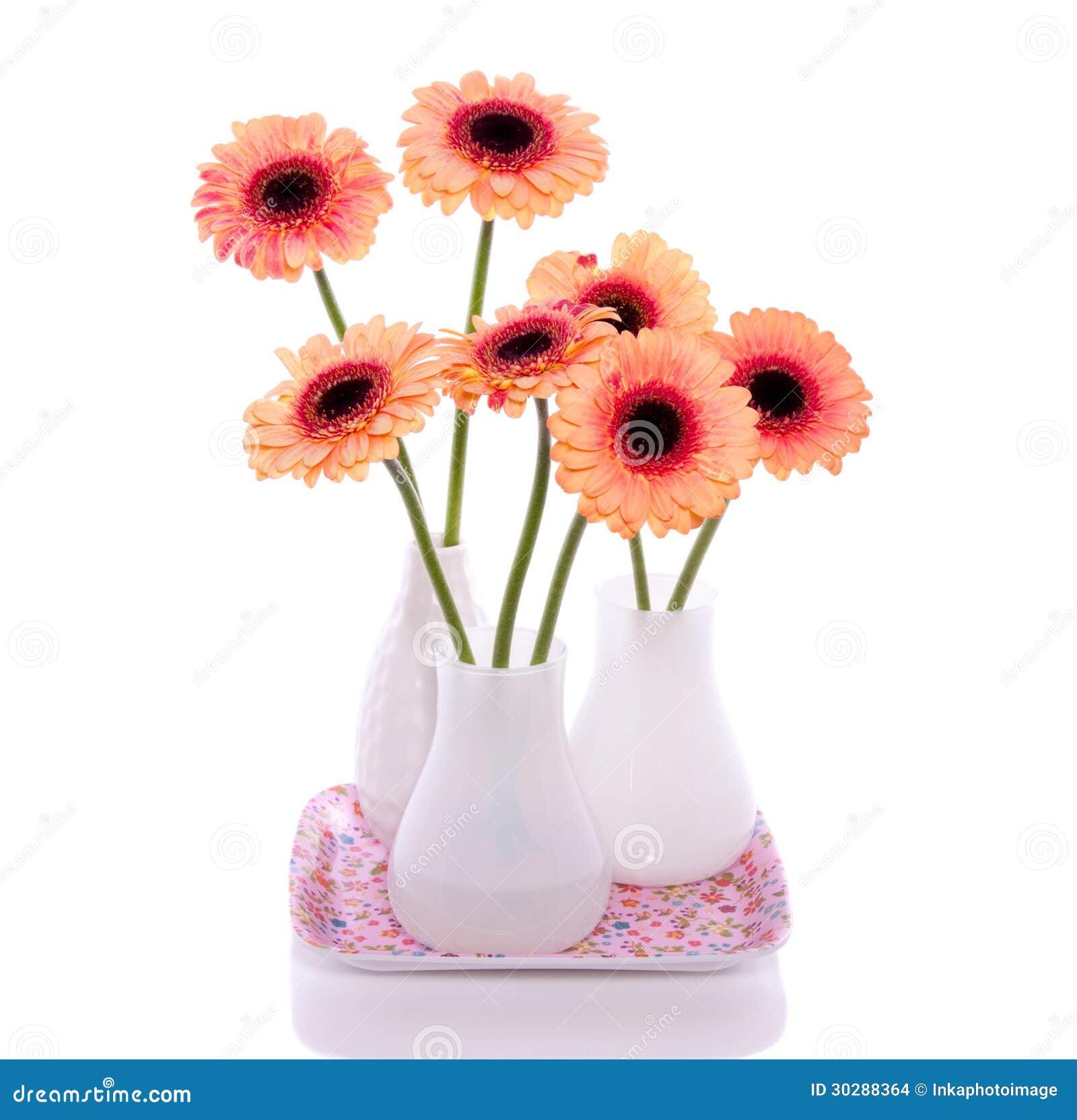 Orange Pink Gerber Flowers In White Little Vases Isolated ...