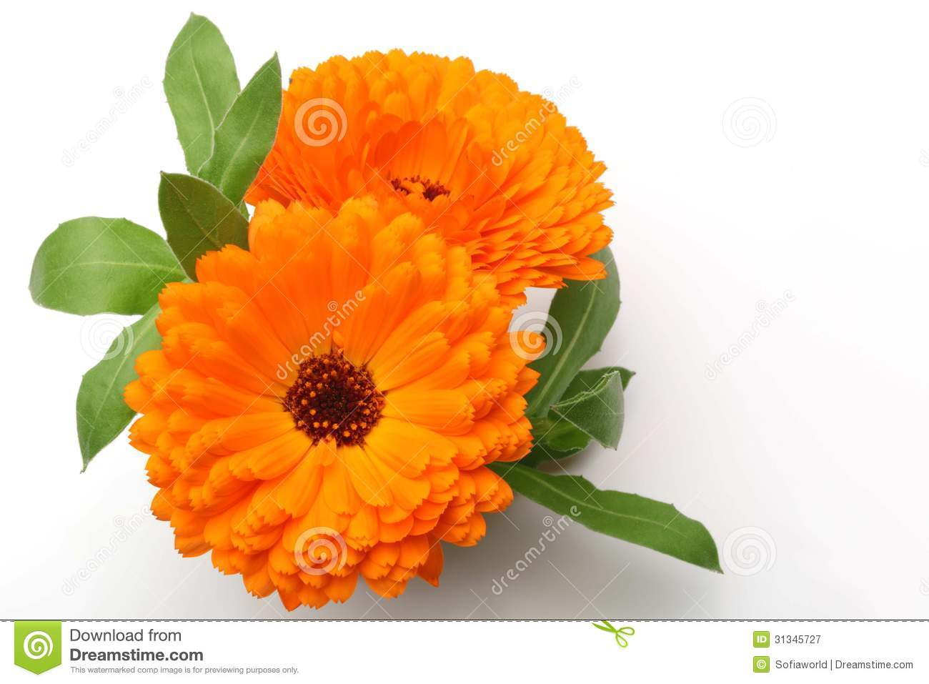 Marigold Flowers In Pots - Floral delivery