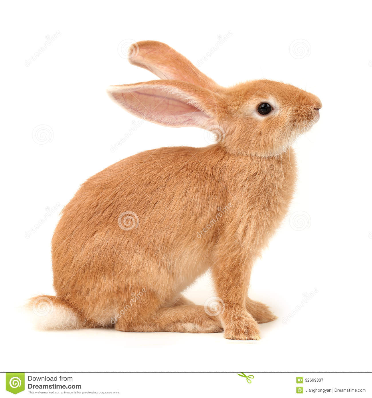 Orange Rabbit Royalty Free Stock Photography - Image: 32699837