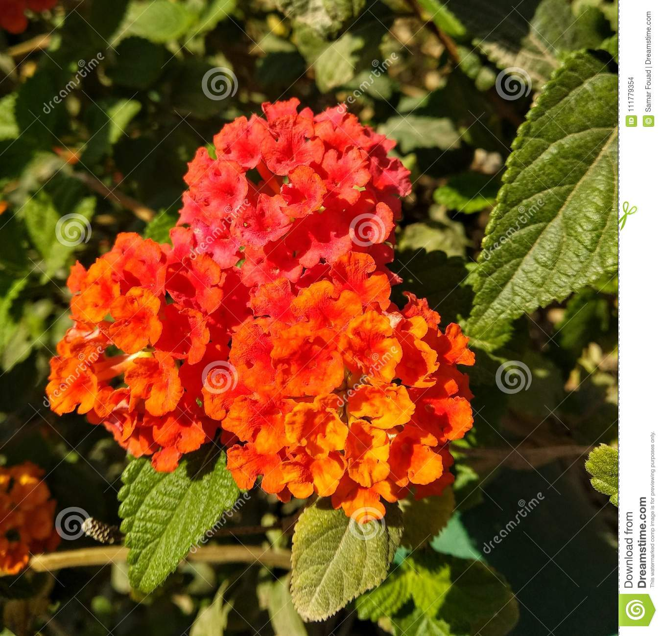 Orange and red flowers