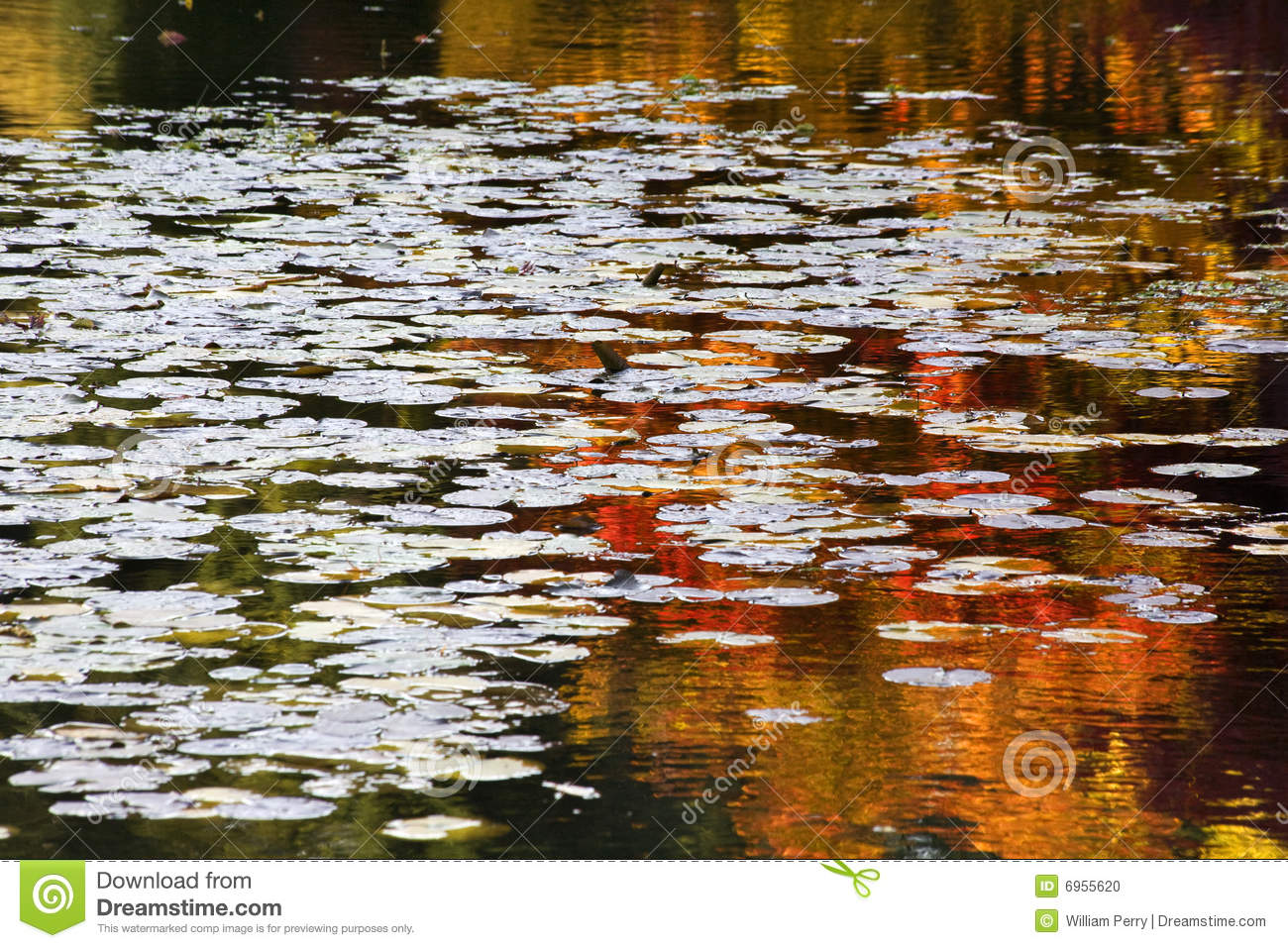 Orange Red Lily Pads Water Reflections