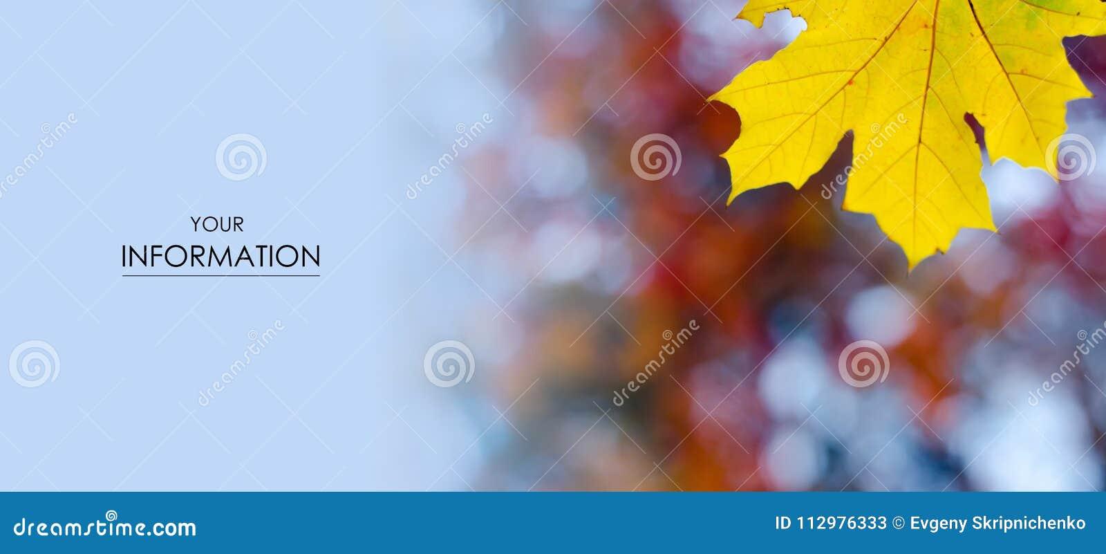 Orange red yellow leaves autumn pattern