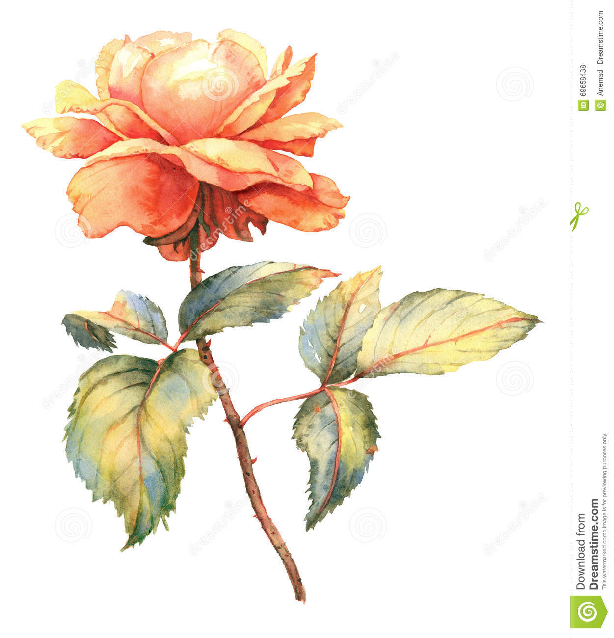 Orange rose watercolor illustration stock illustration for Botanic fleurs artificielles
